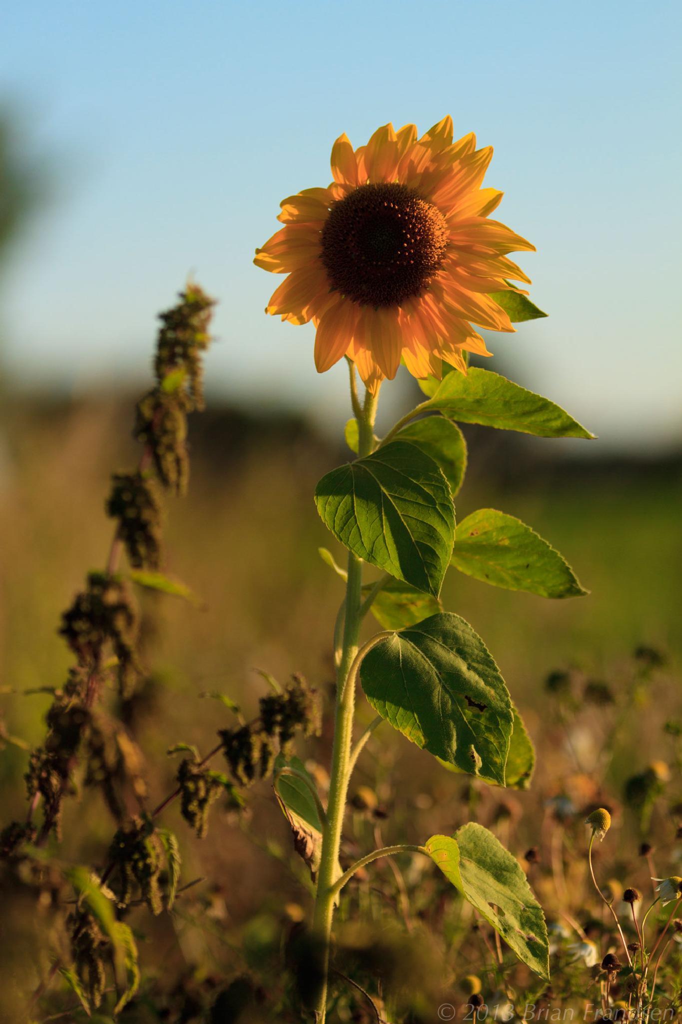 Last flower standing by Brian Frandsen