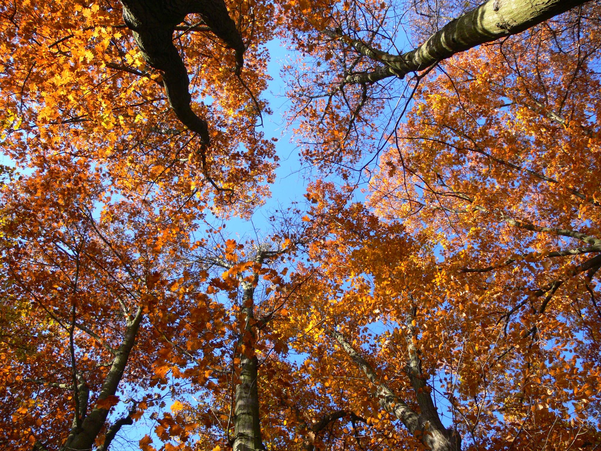 tree by szilvia.szita