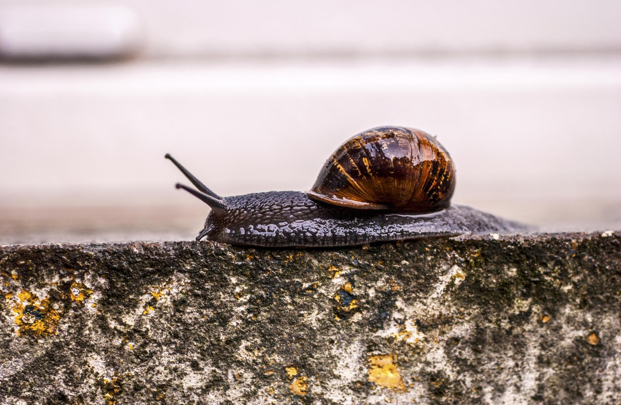 Snail on the window sill by howard.rollinson