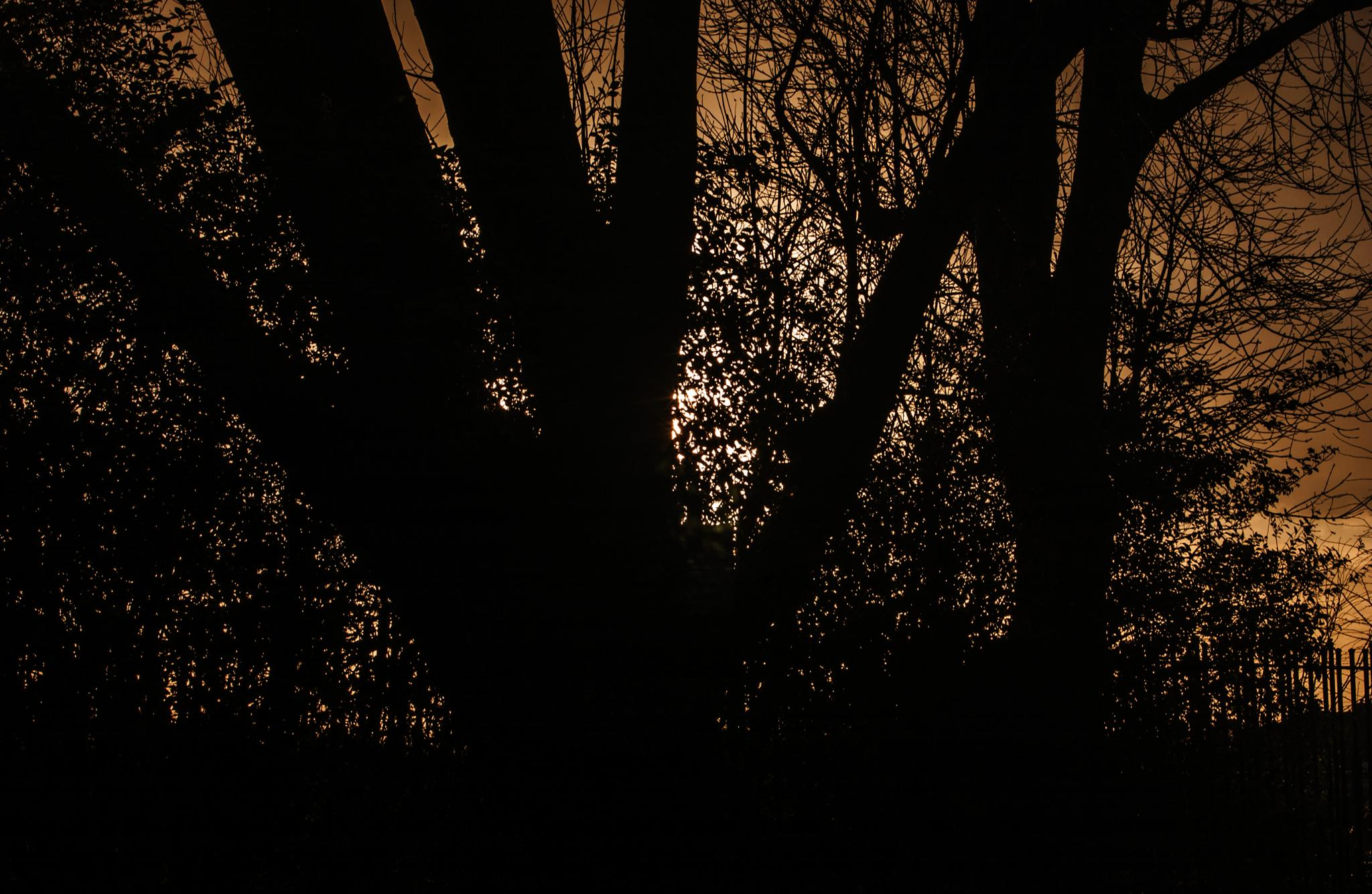 Sunset Through the trees by howard.rollinson