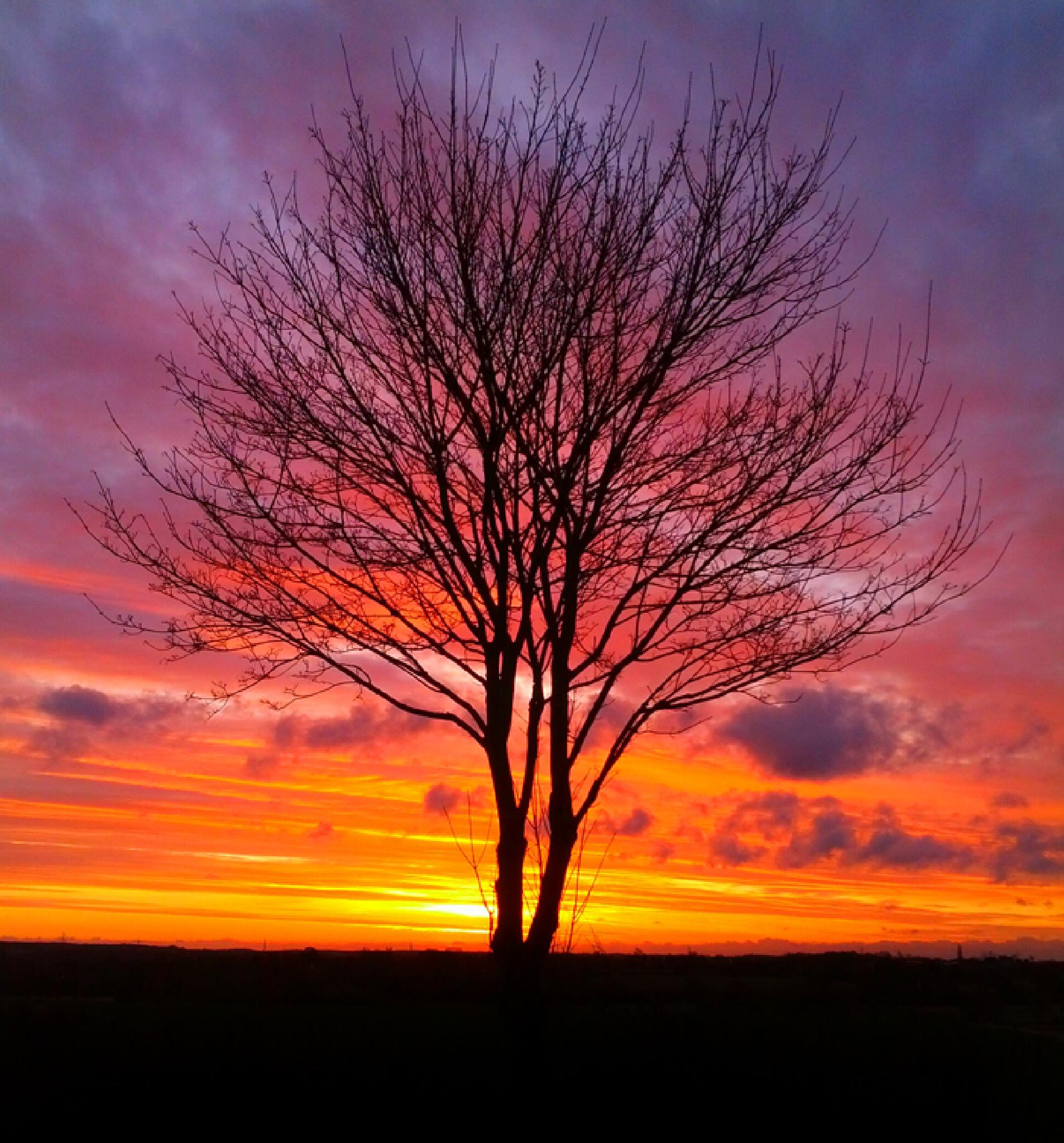 tree in the sunrise by ashley reed