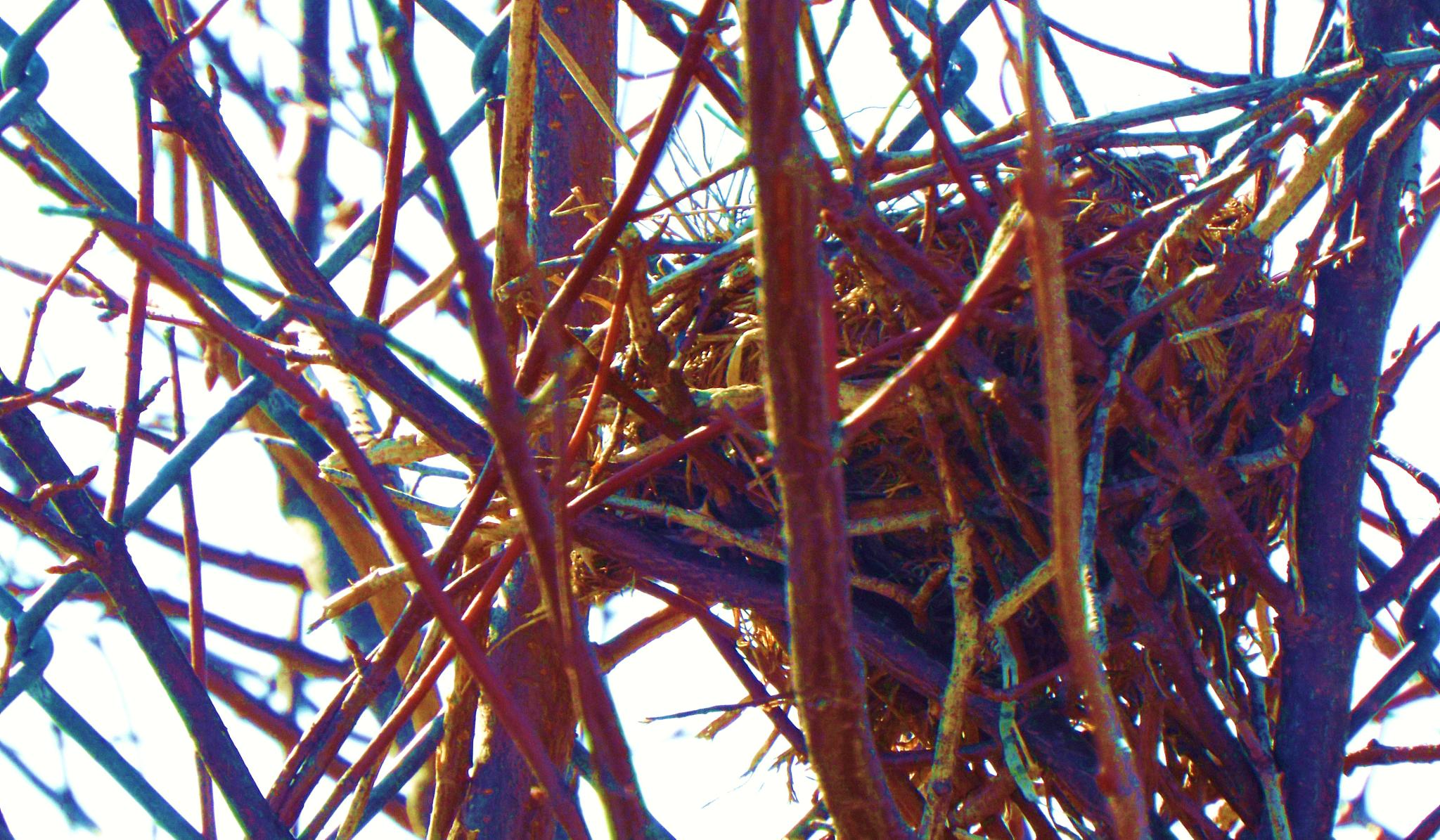 Photo in Nature #nest #bird #tree #twigs #art #mother #babies #nature #winter #branches
