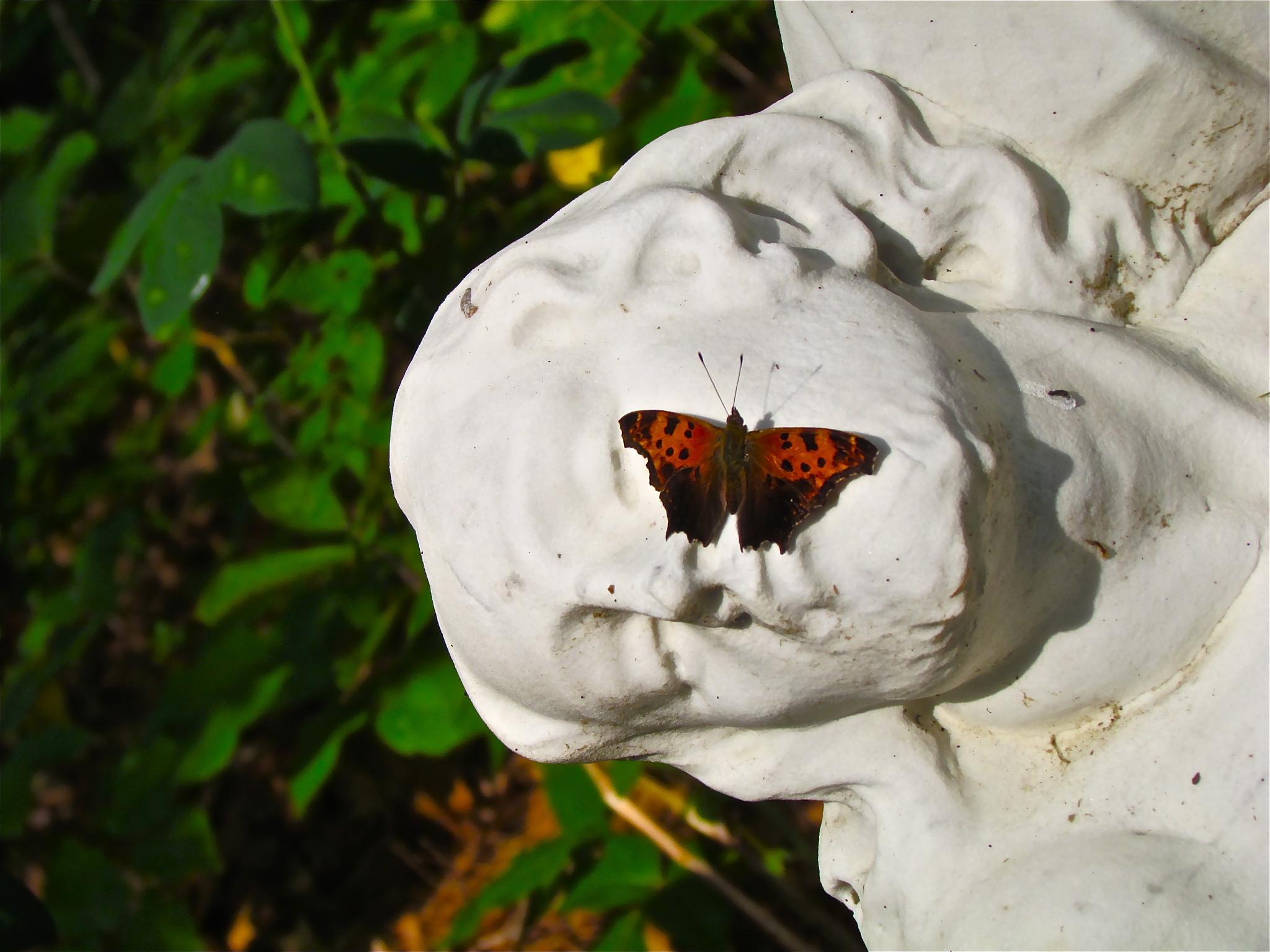 ..A model , butterfly... by ricardoc2