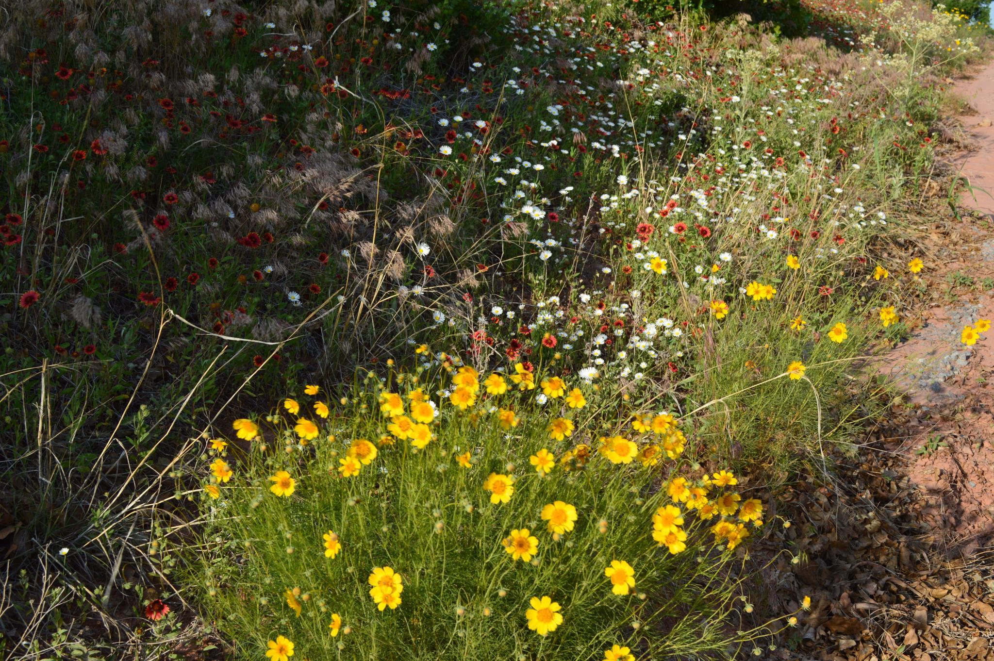 Wildflowers in Bloom by VickiB