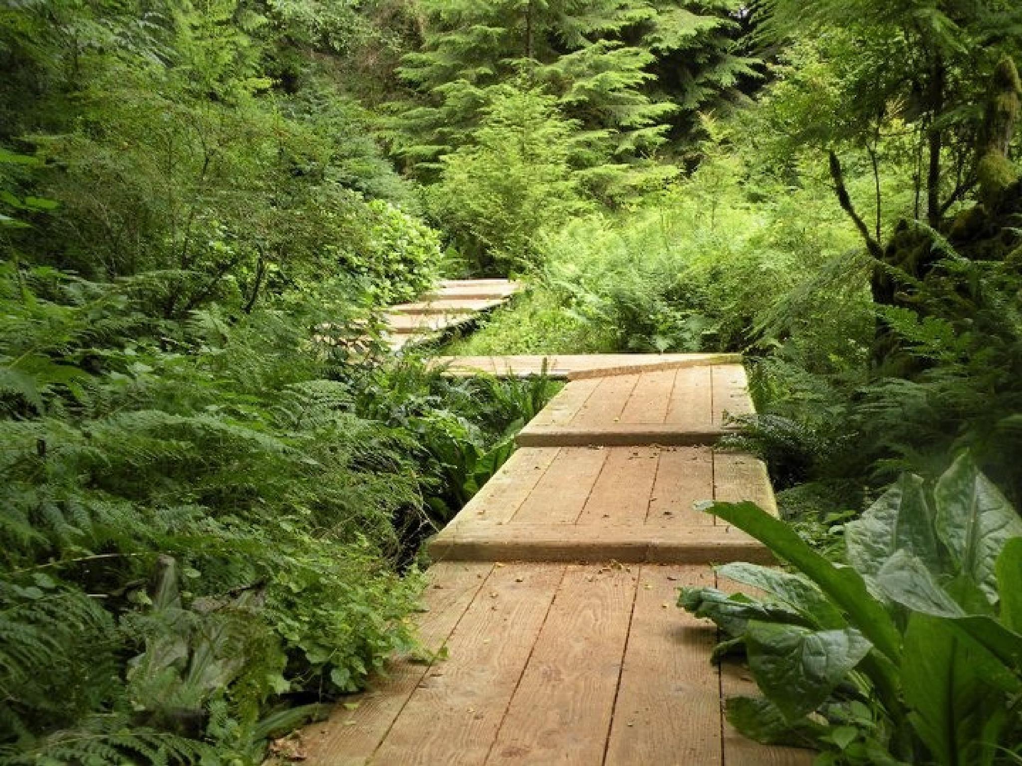 Bridge To Nowhere by VickiB