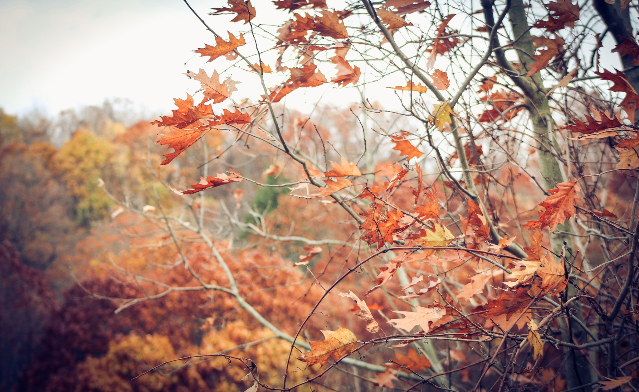 The Colors of Fall 13 by Adib Mady
