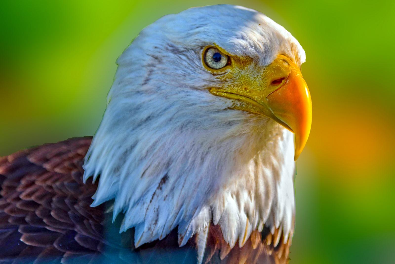 Eagle's portrait. by Stamatis Vlahos