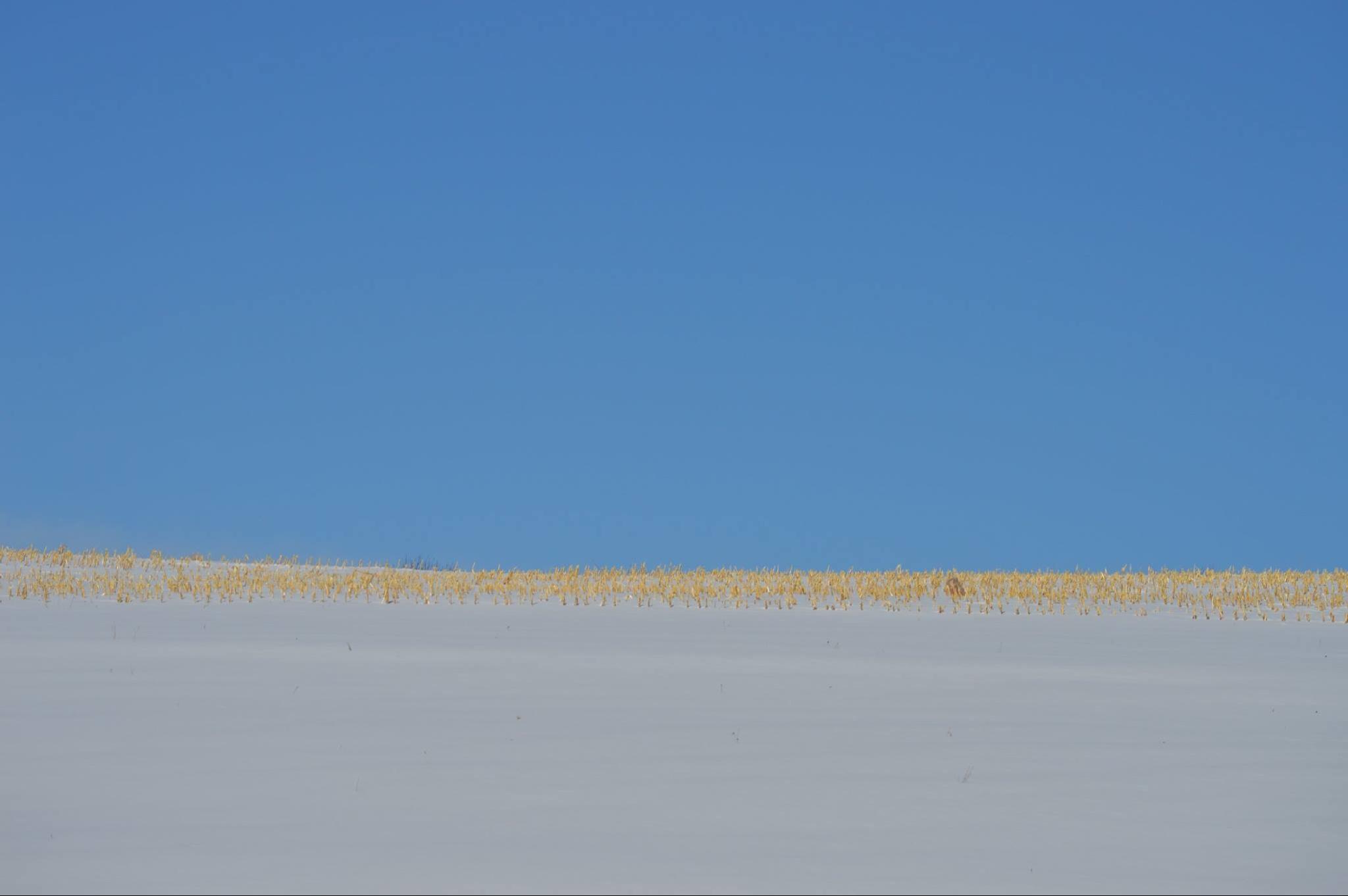 Dead of winter  by stephen.wertz.3