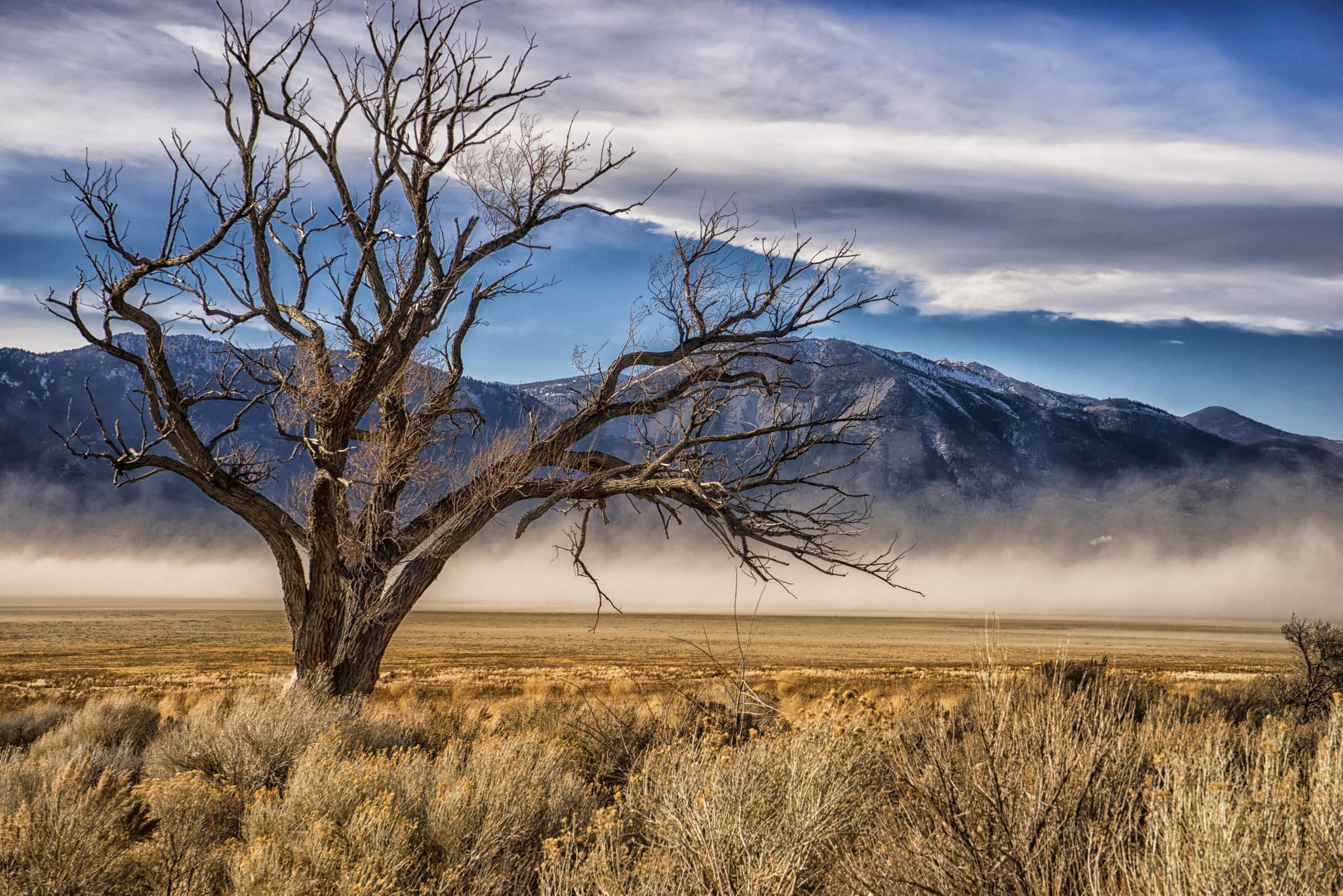 Washoe Lake Blows away by Janis Knight / Home Planet Images