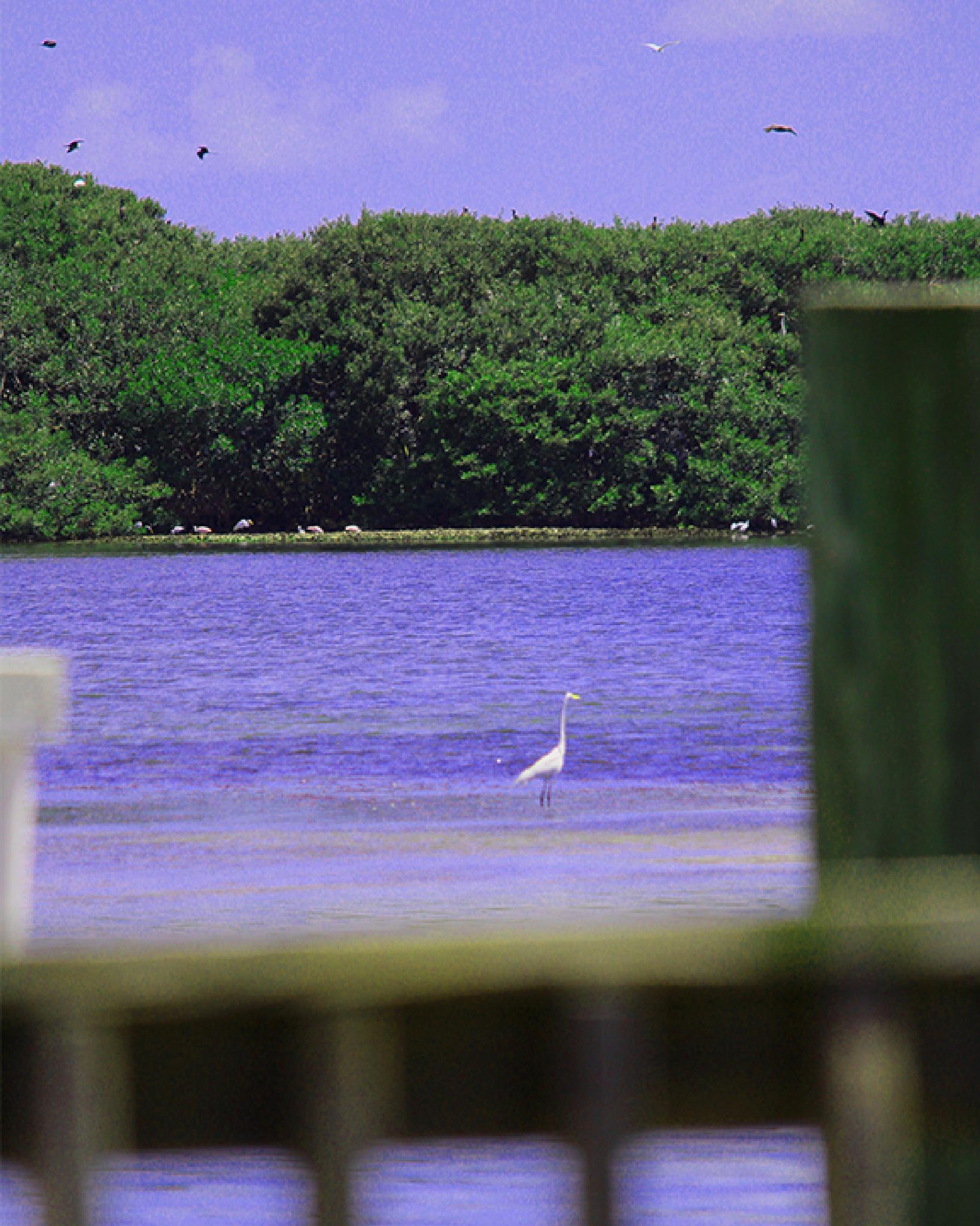 Solitary Crane as seen from Dock. by Xuryon