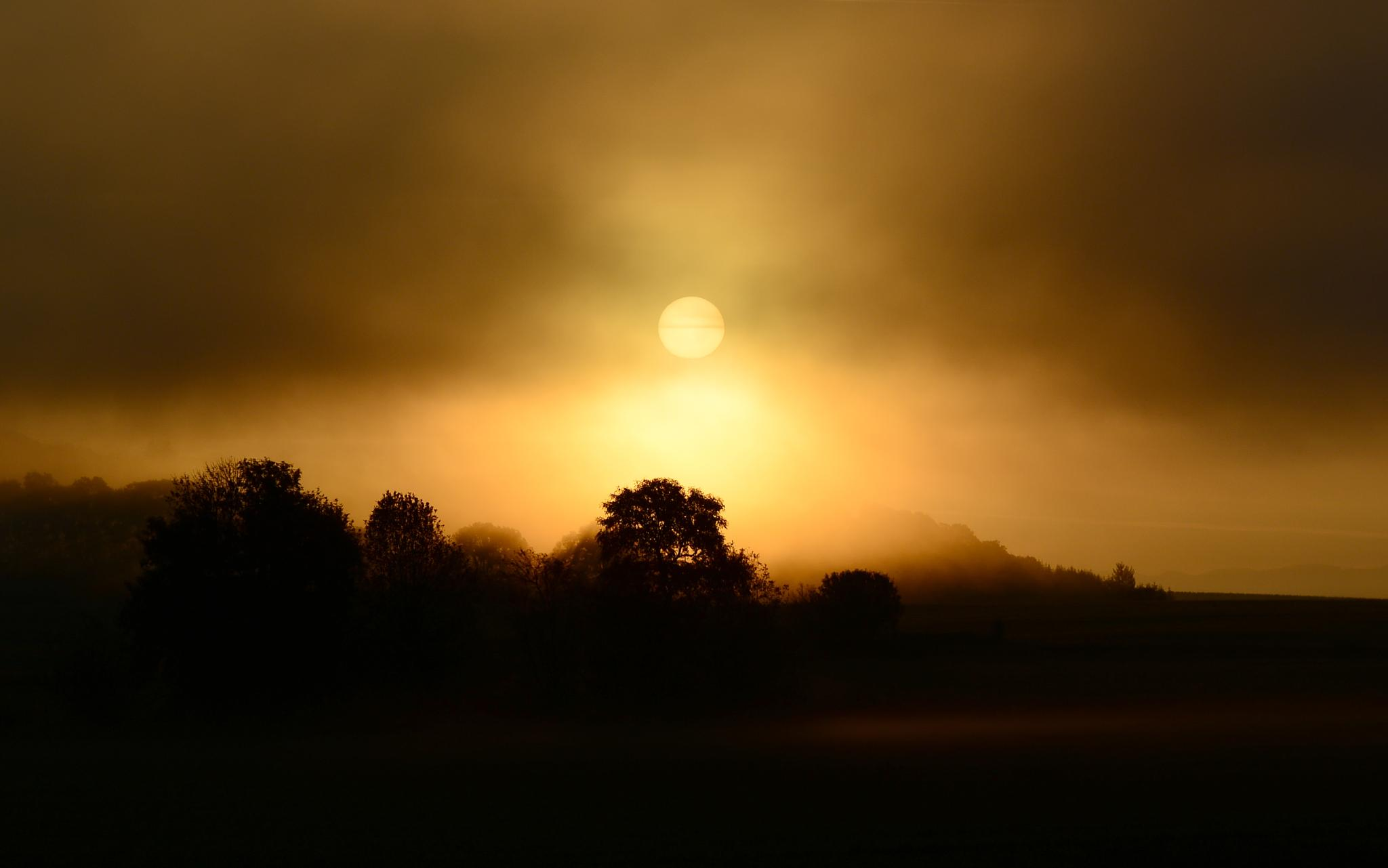 Foggy Sunrise by Don Wilder