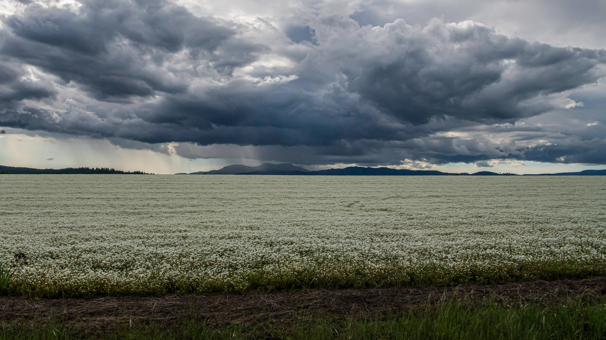 White Field and Rain by Don Wilder