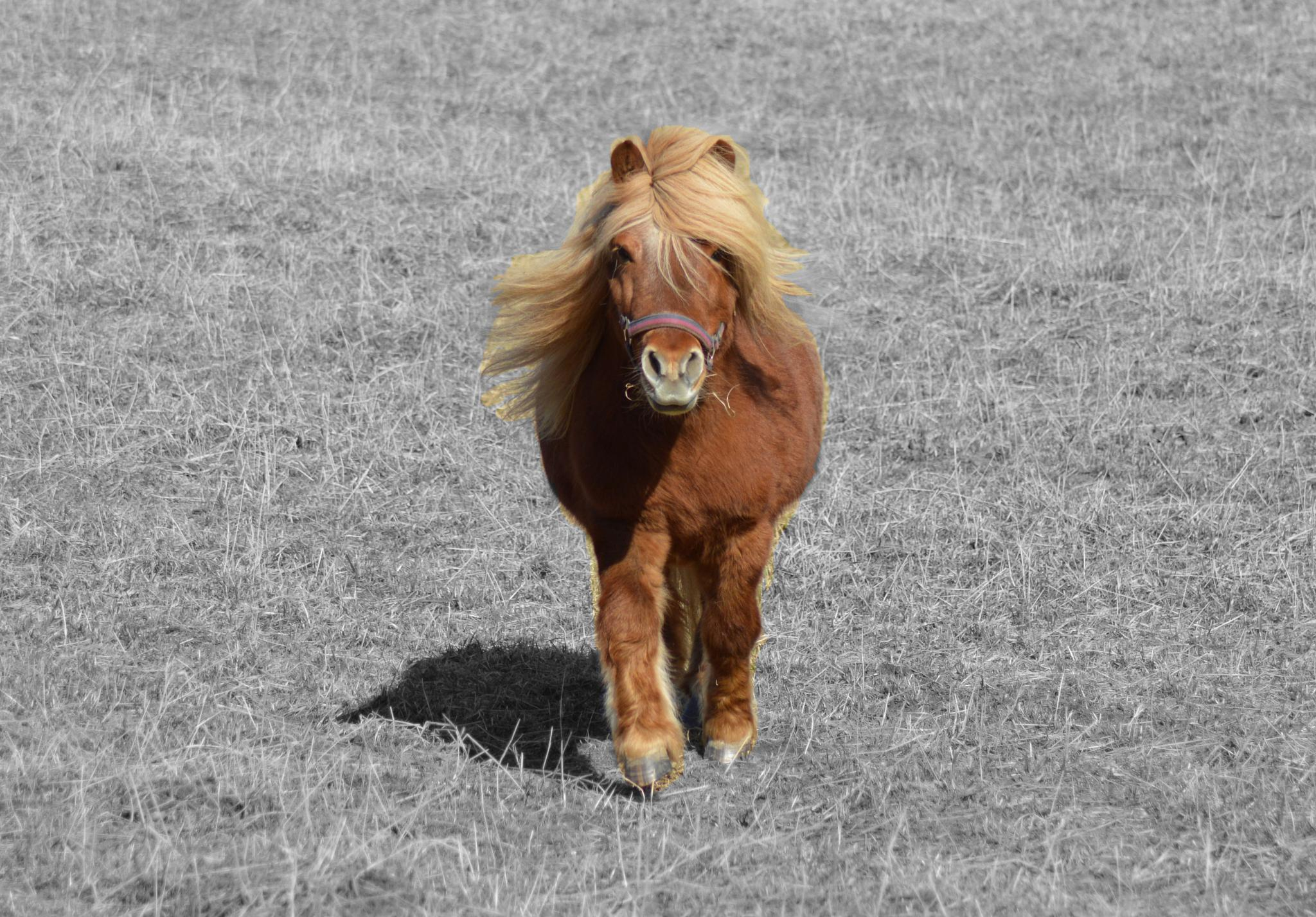 Photo in Animal #häst #horse #ponny