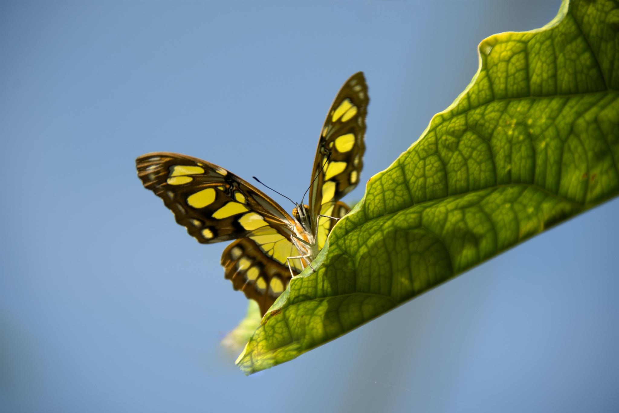 A Butterfly Garden by Brian Weaver