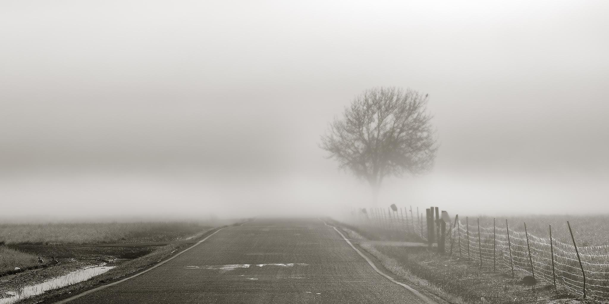 Morning fog bank in the country. by Craig Strobeck