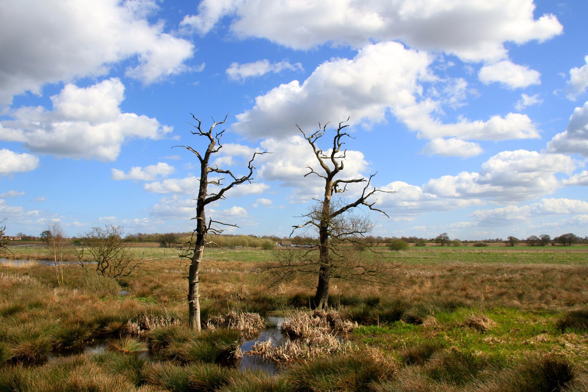 Wetlands by Martin Roper