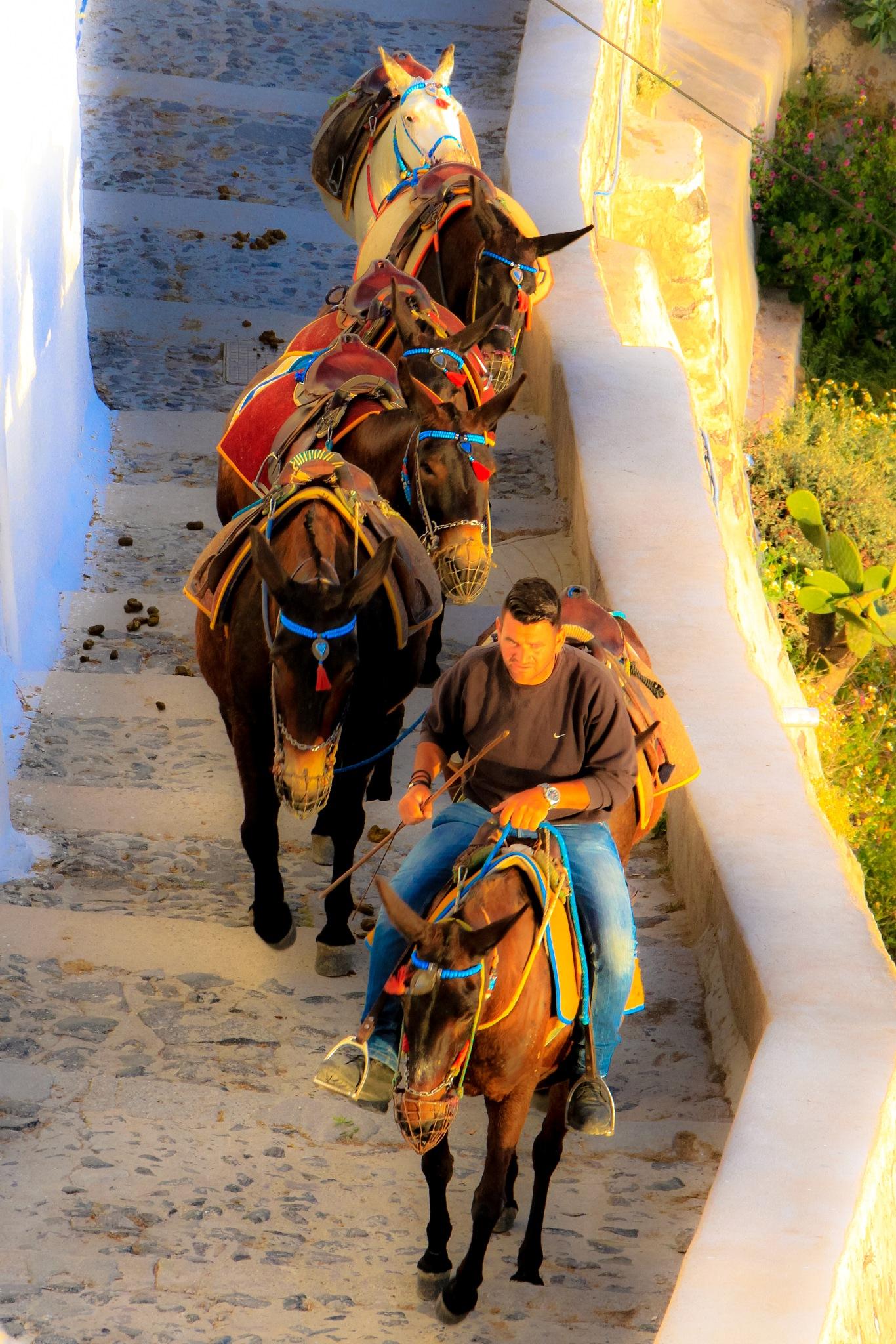 Donkeys by Martin Roper