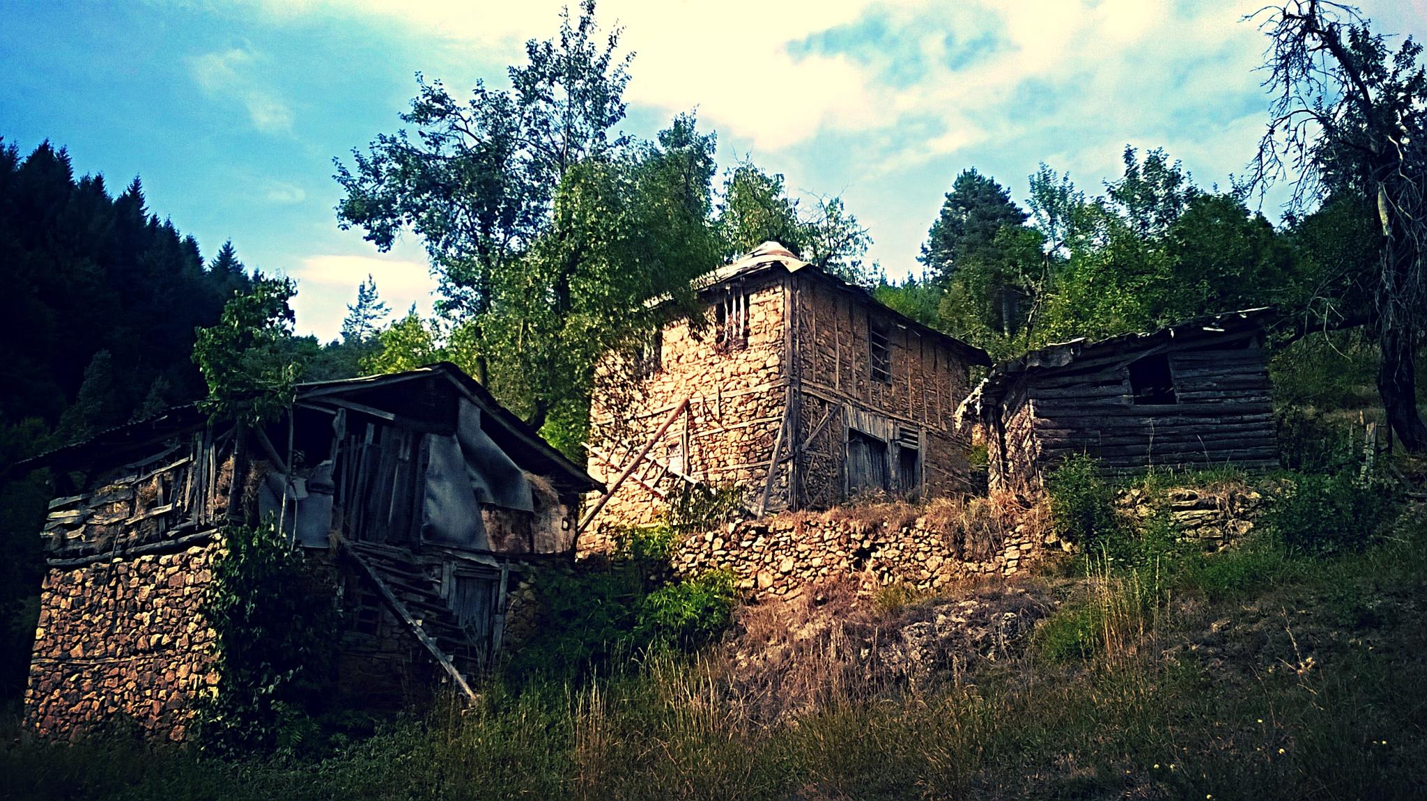 rural landscape by Krasi Asenov