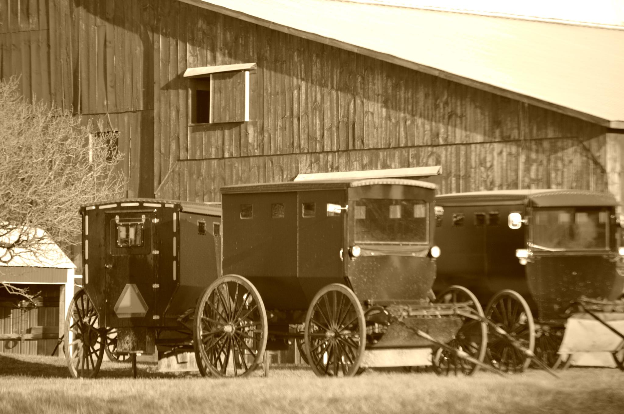 Amish Buggy's by tammy.hayes3