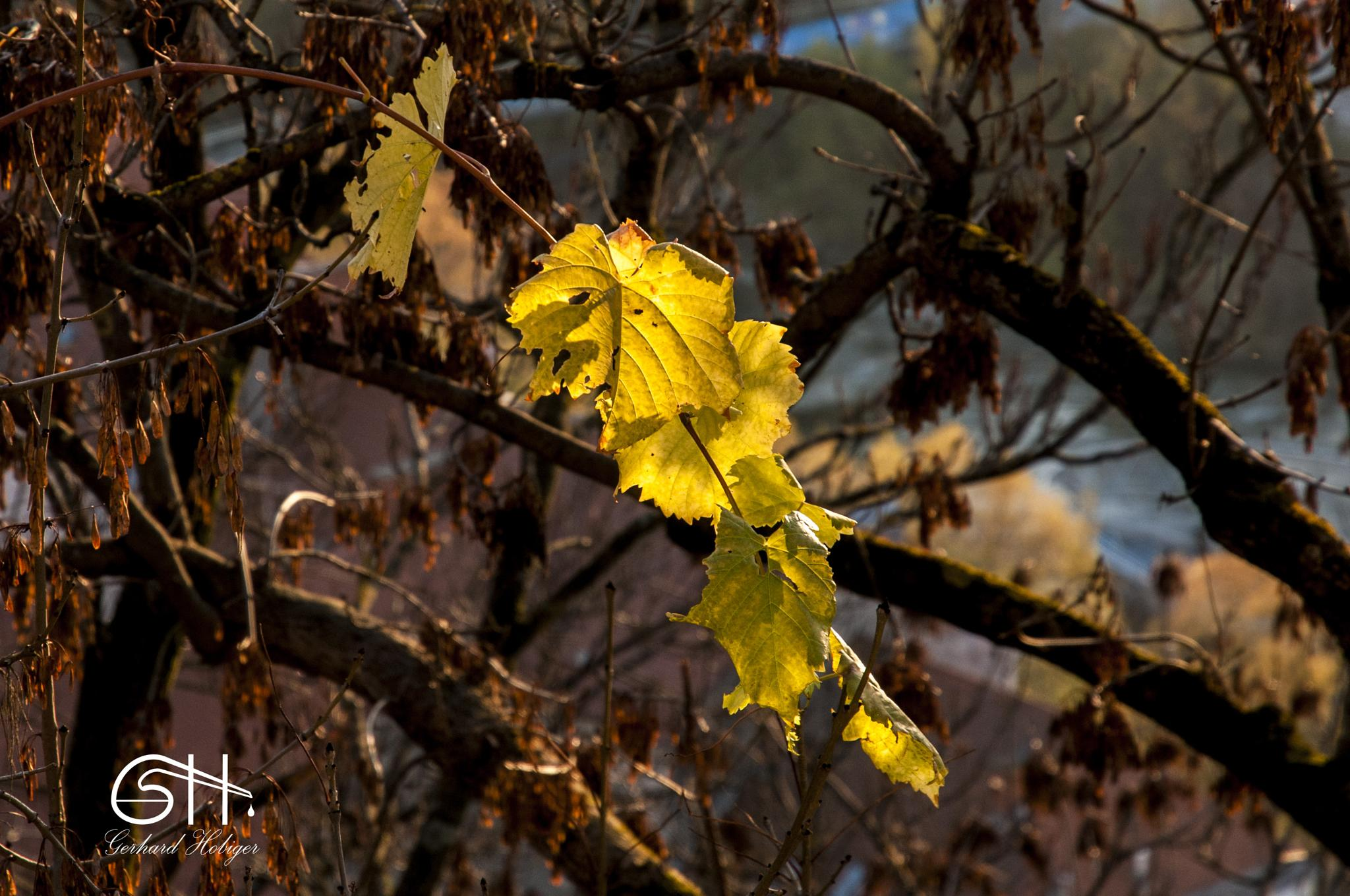 Fall in Graz by gerhardhobiger