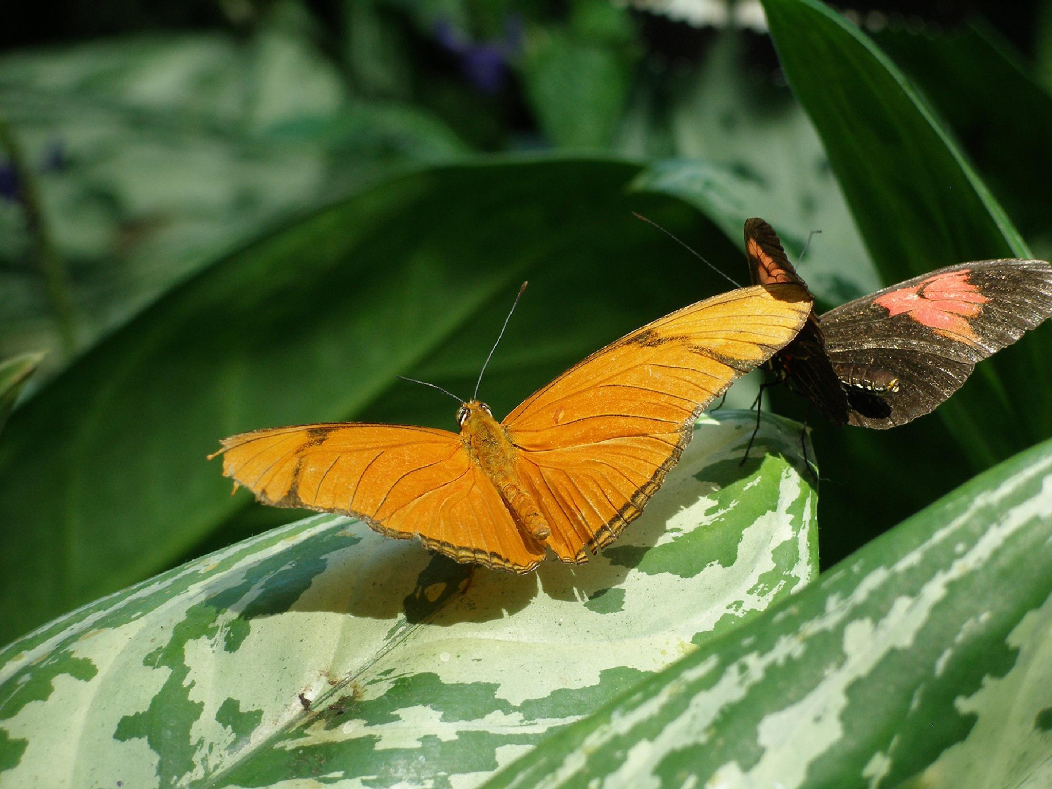 Butterflies by Olle Möller