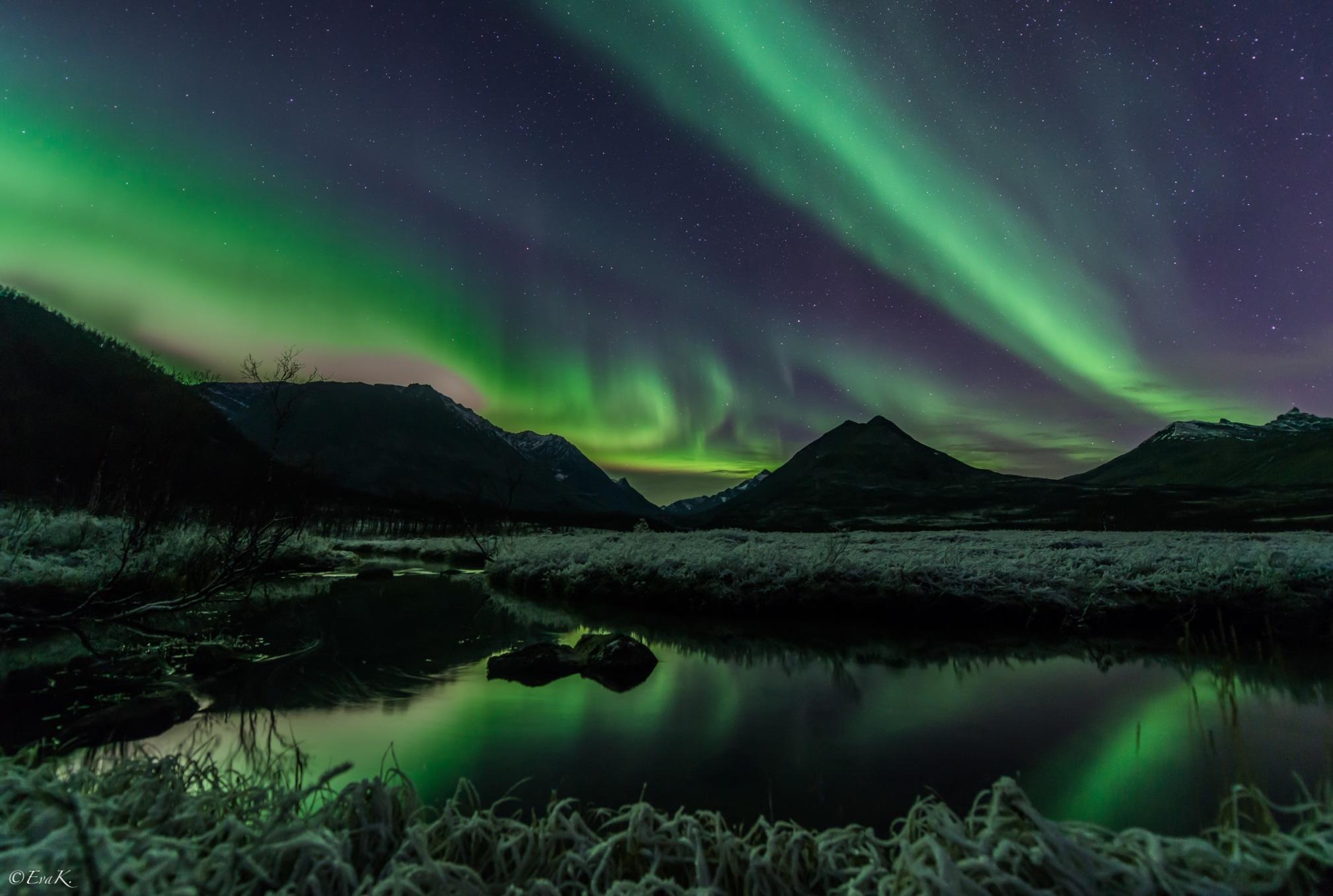 Frost by Eva Kristiansen