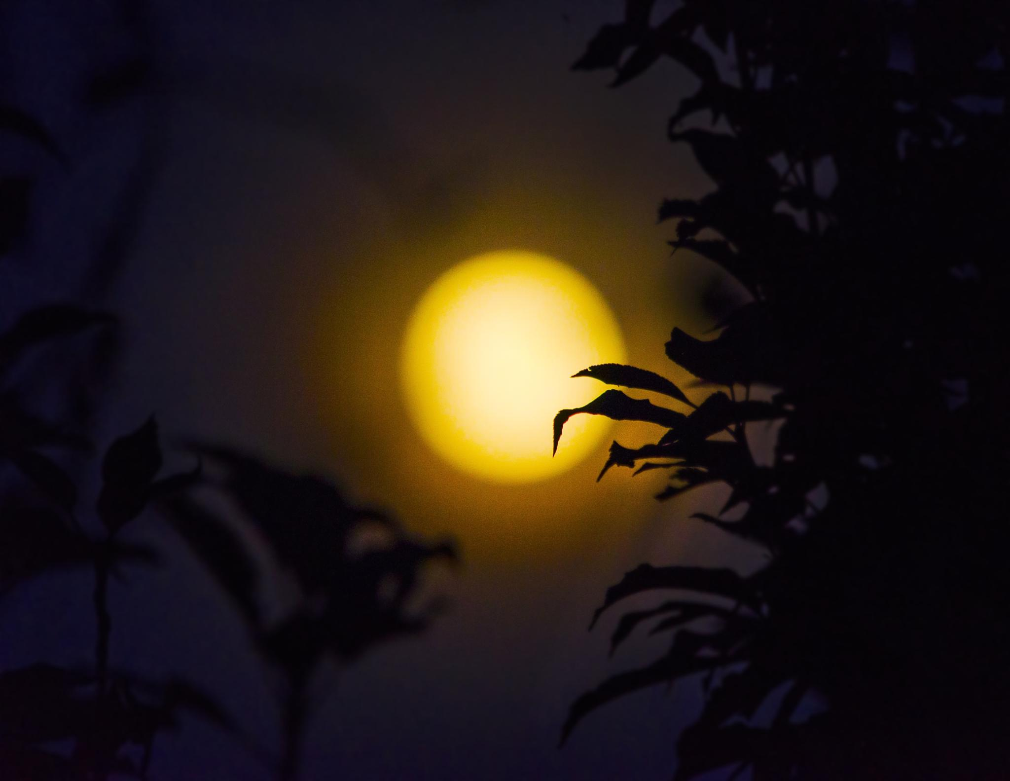 e la luna bussò by Guendalina Quattrocchi