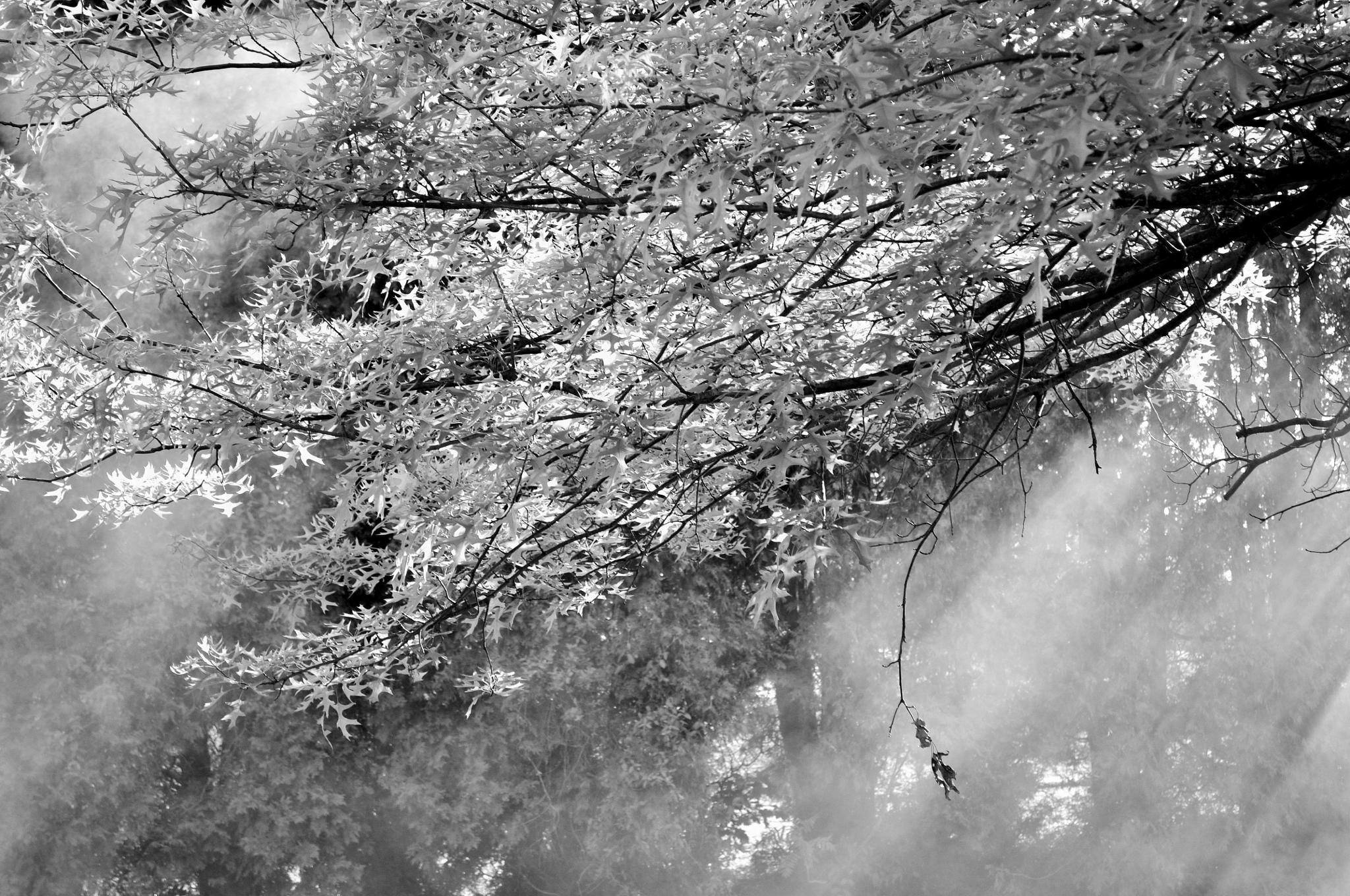 Smoke by Cynthia Hutton