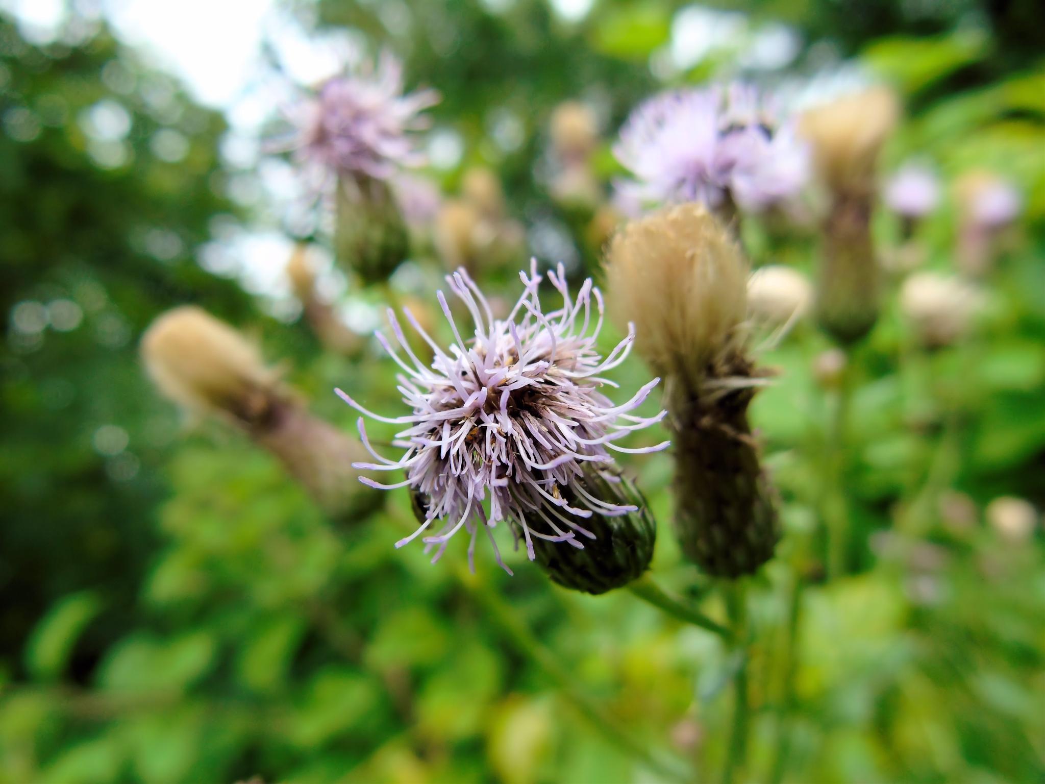 Strange wildflower by Cynthia Hutton