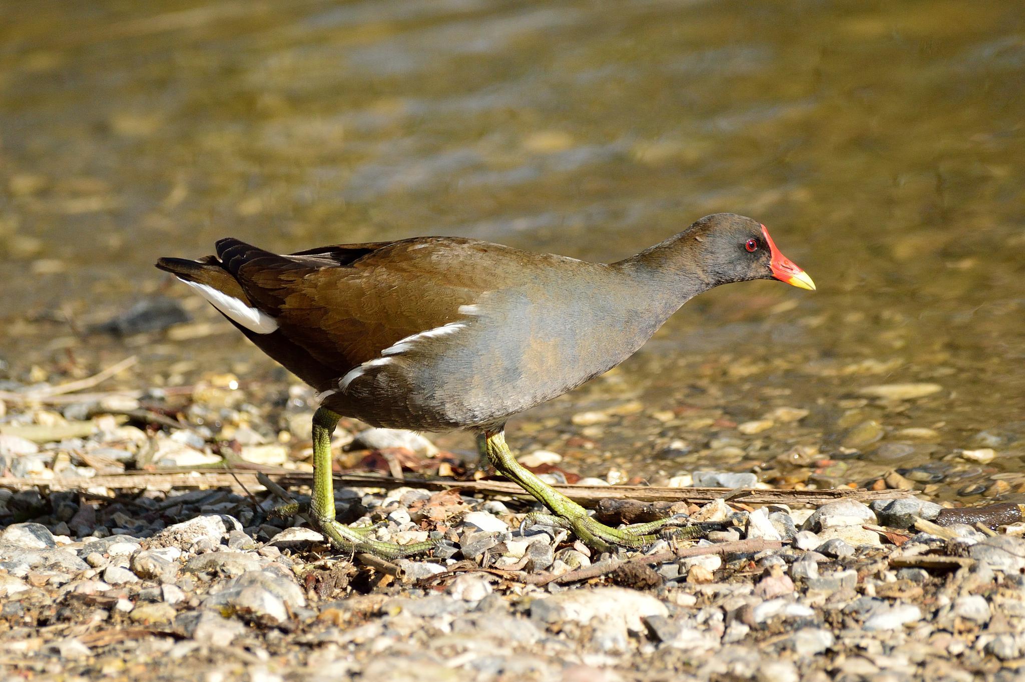 Bird at a lake by Tobrano
