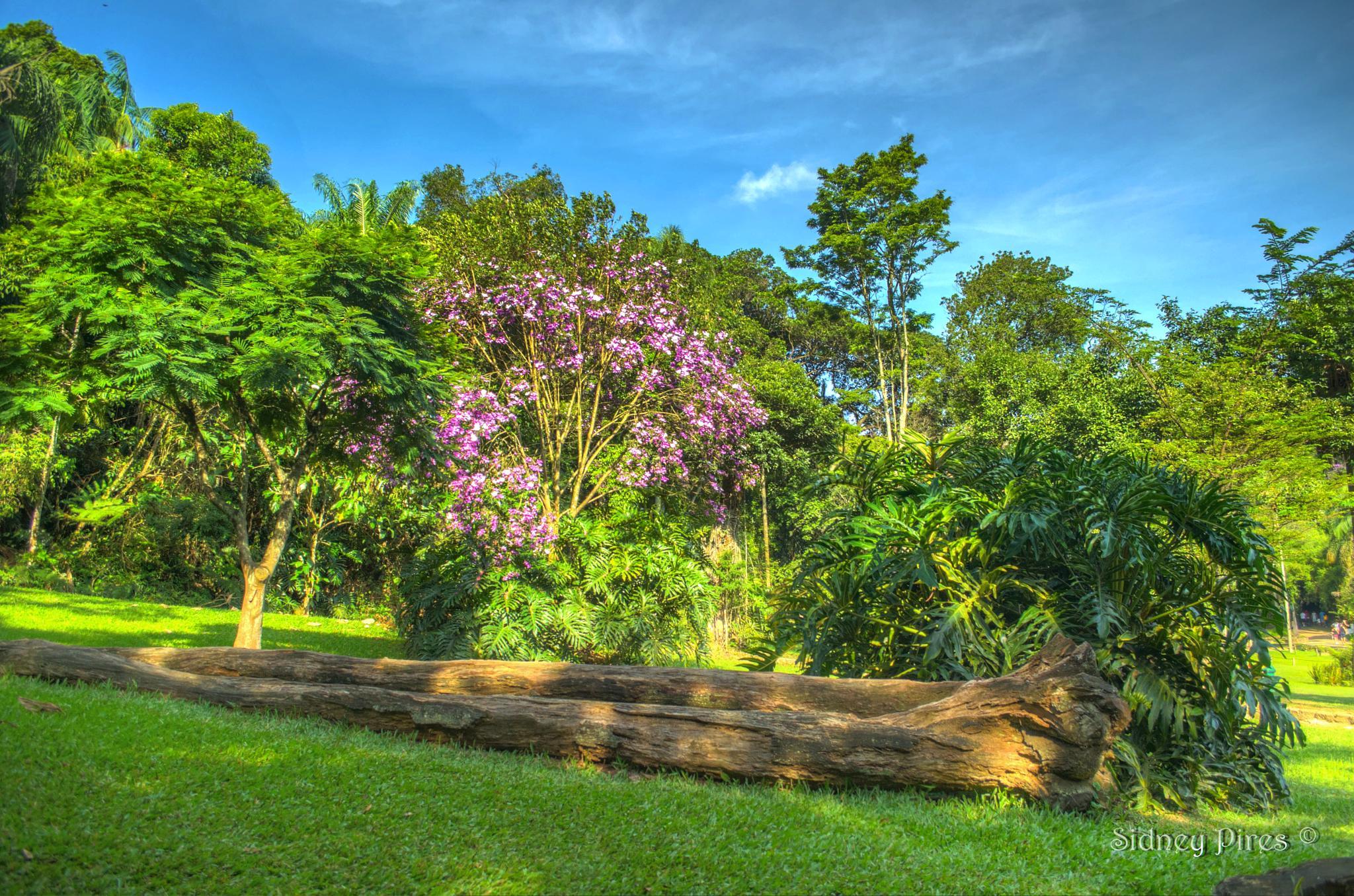 Jardim Botânico by Sidney Pires Fotografia