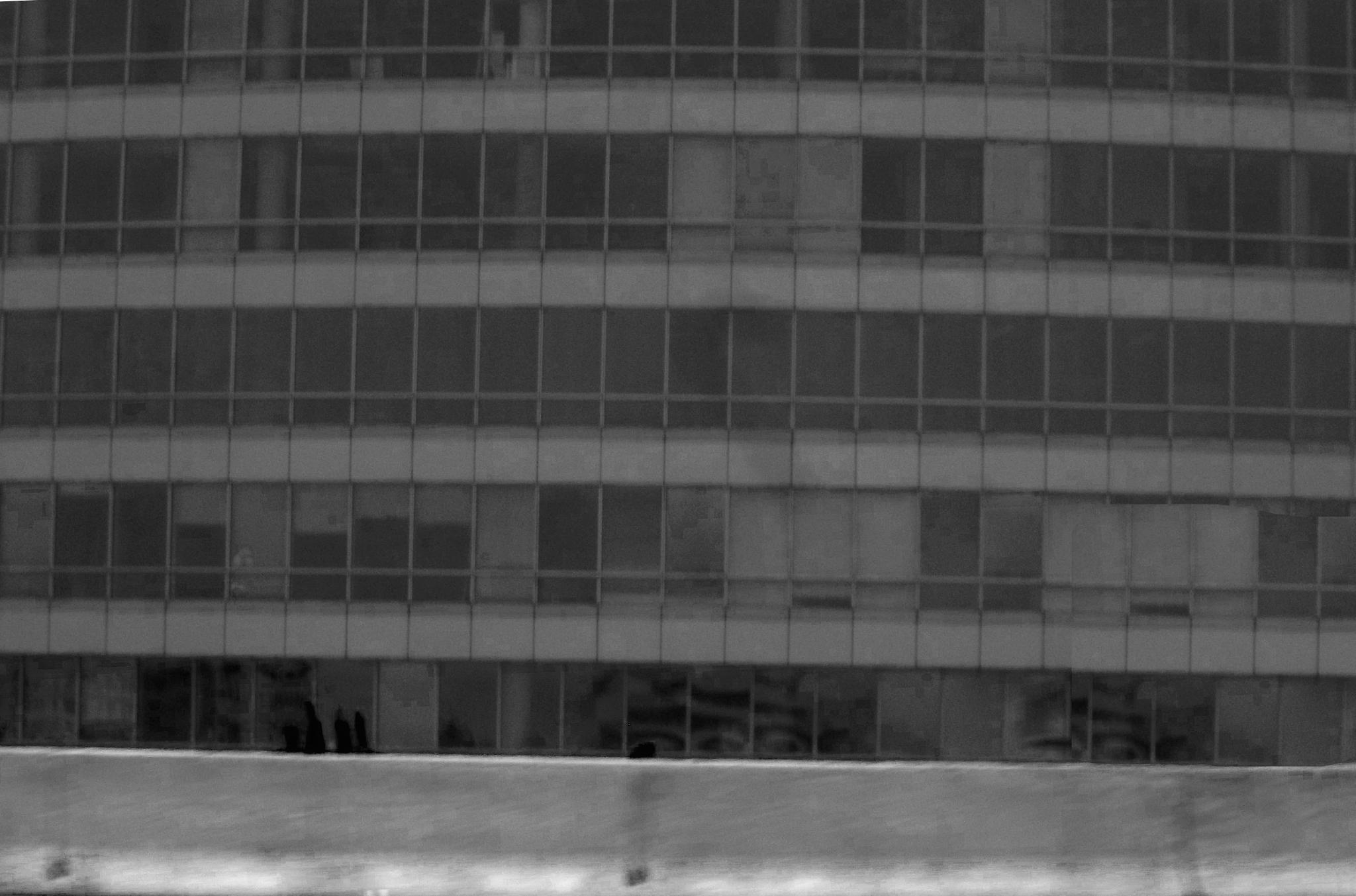 Windows  by evelyn.vinson