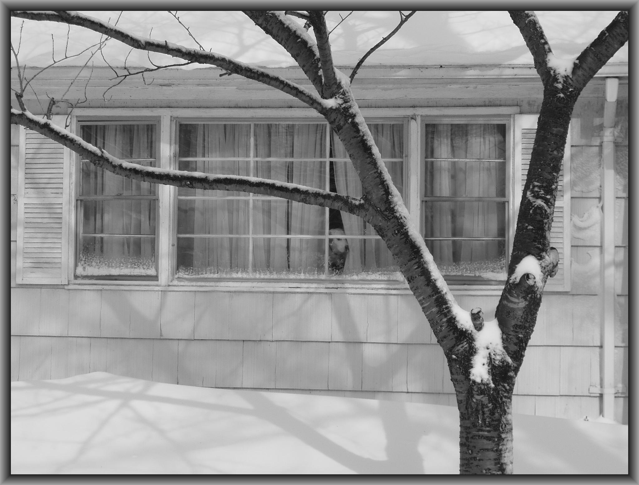 Molly in the Window 3 by M. R. Warner