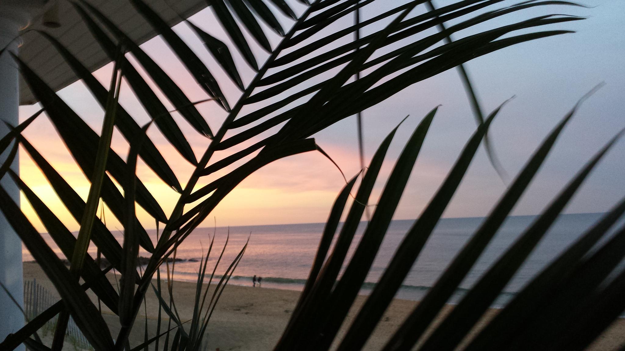 Porch view of Plum Island beachgoers by wa6dia359