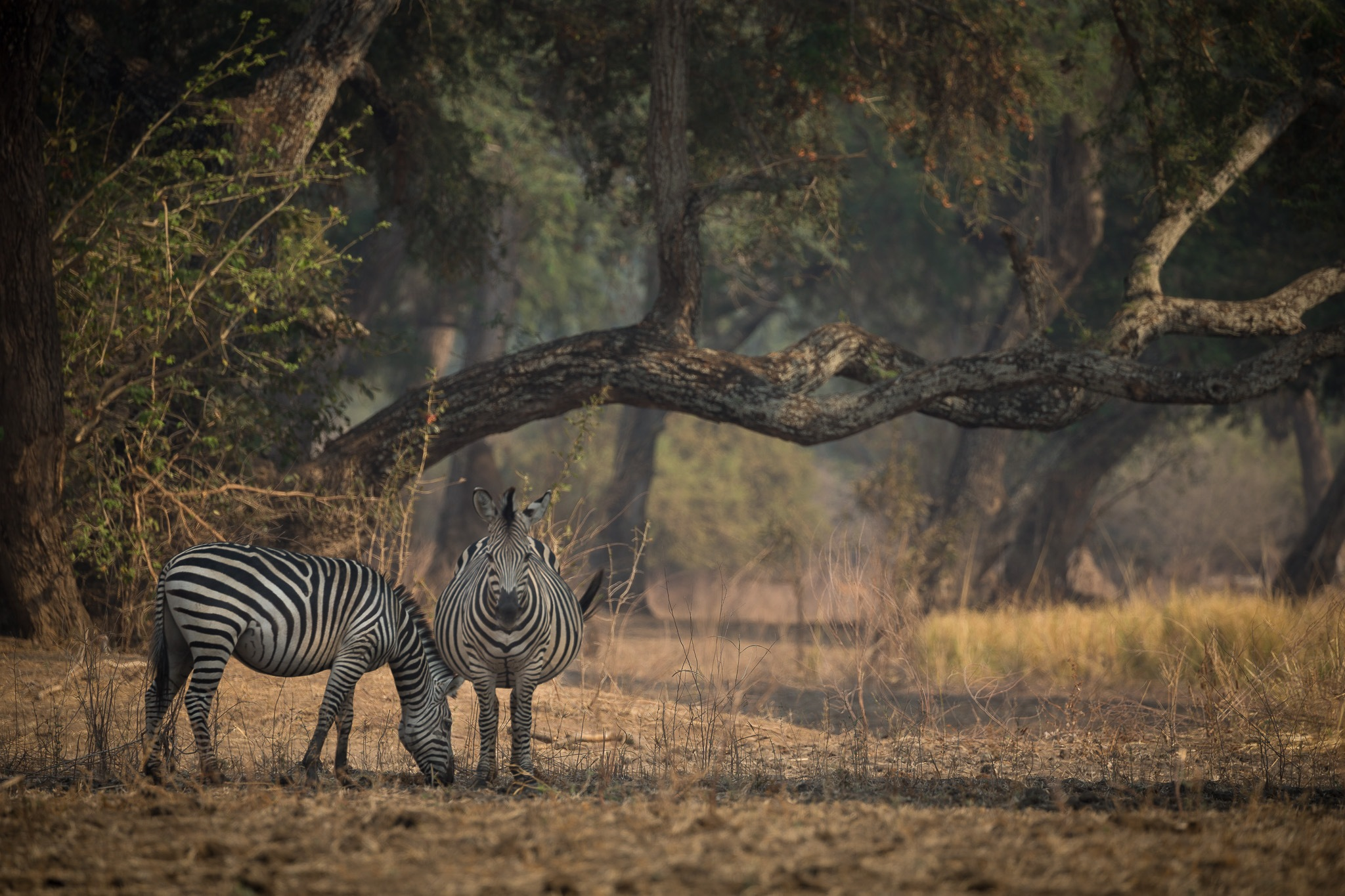 Stretching the stripes  by Kim Rehnfeldt