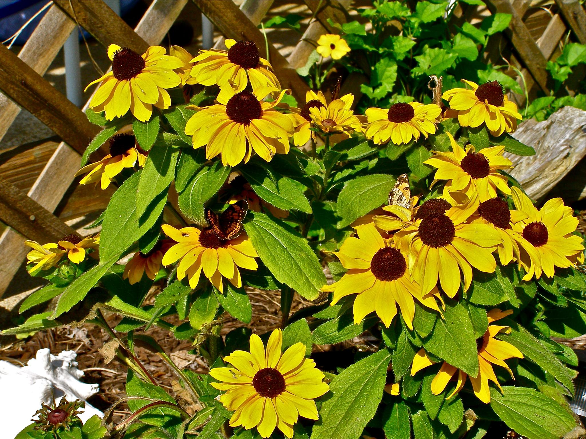 Brown and Yellow by gloria.west.12