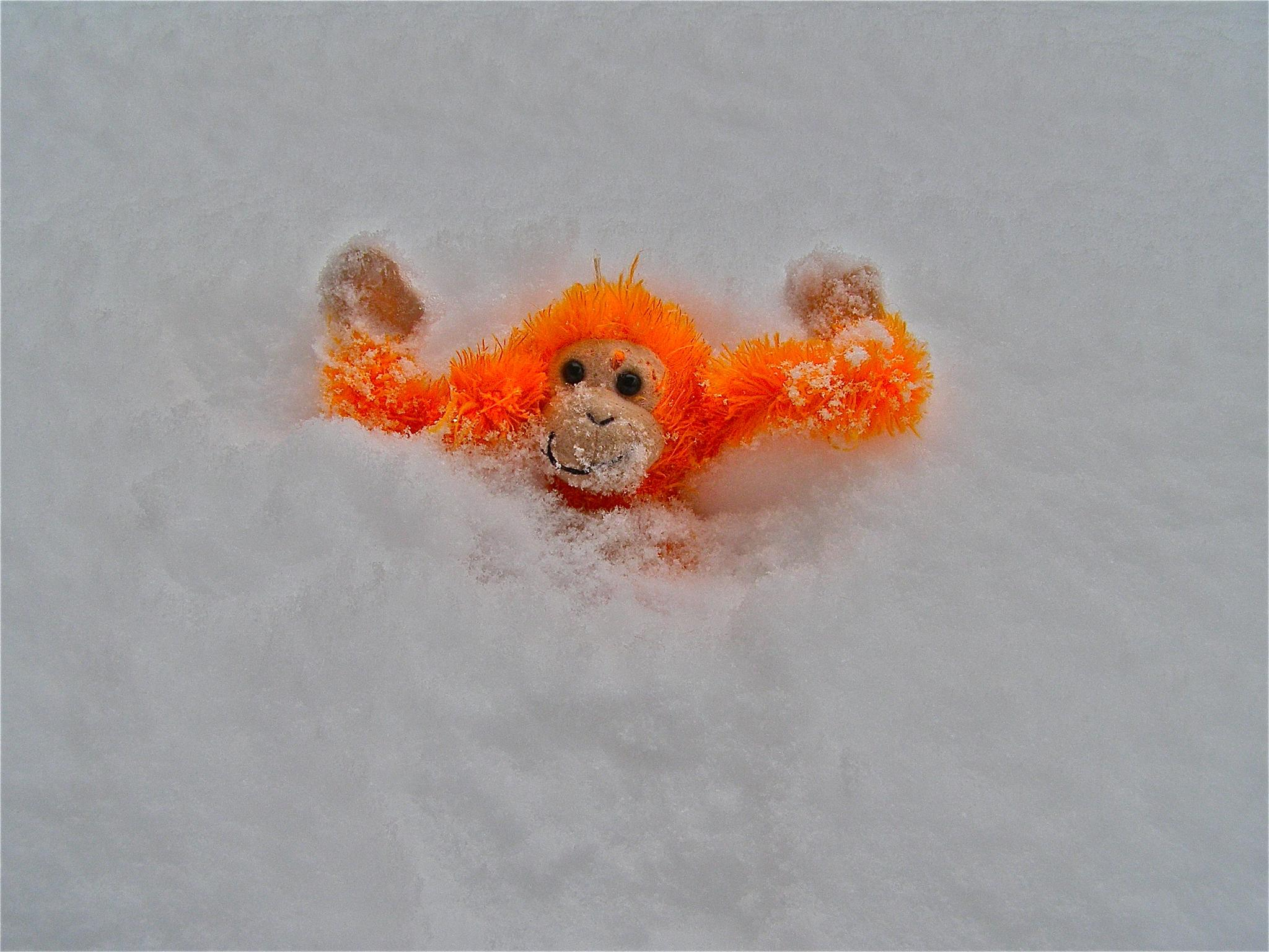 """Monkey in the Snow"" by gloria.west.12"
