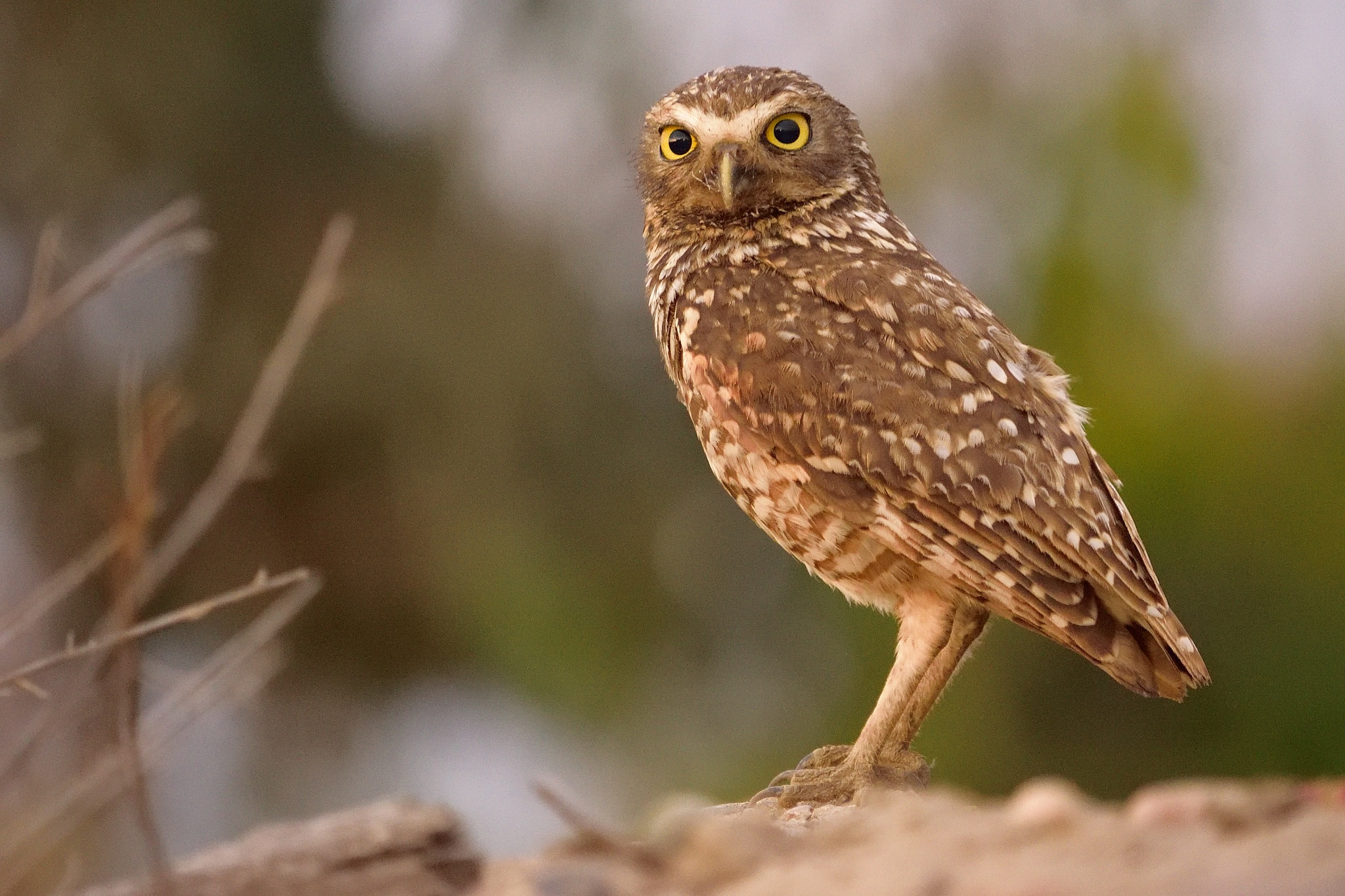 Owl (14) by milualin2006