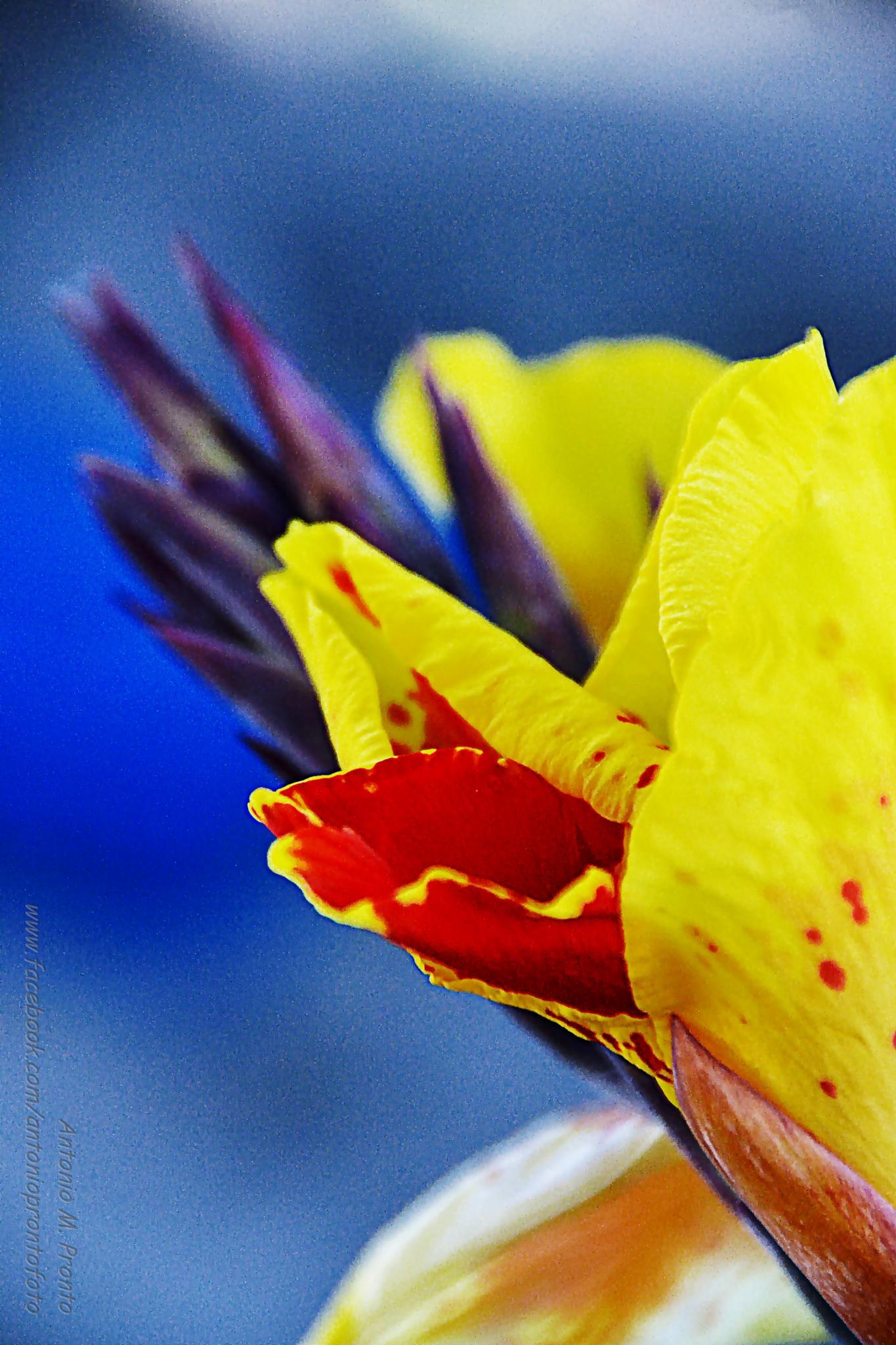 Red Yellow Blue by Antonio Pronto