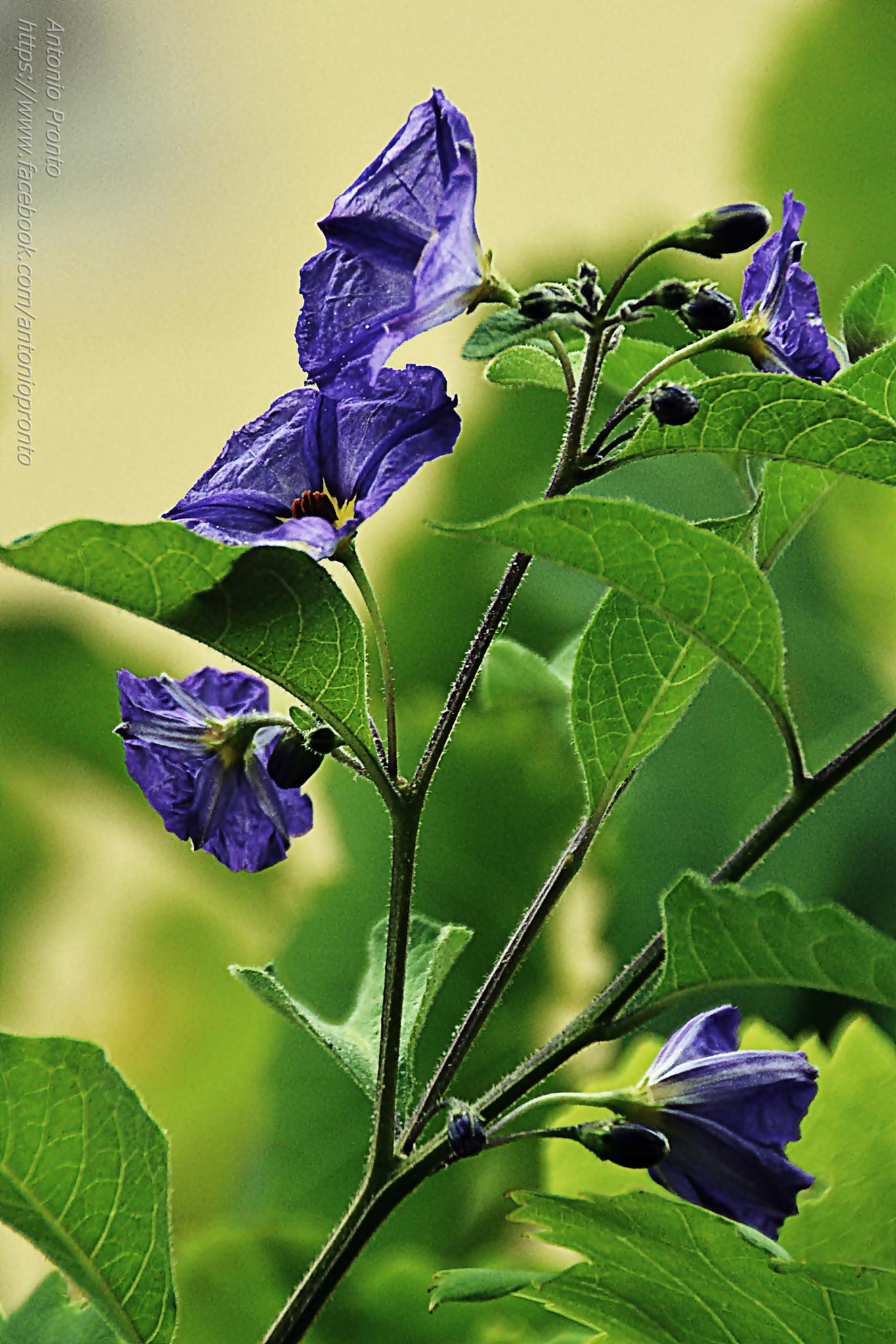 Photo in Nature #flor #flower #naturee #natureza #antonio pronto