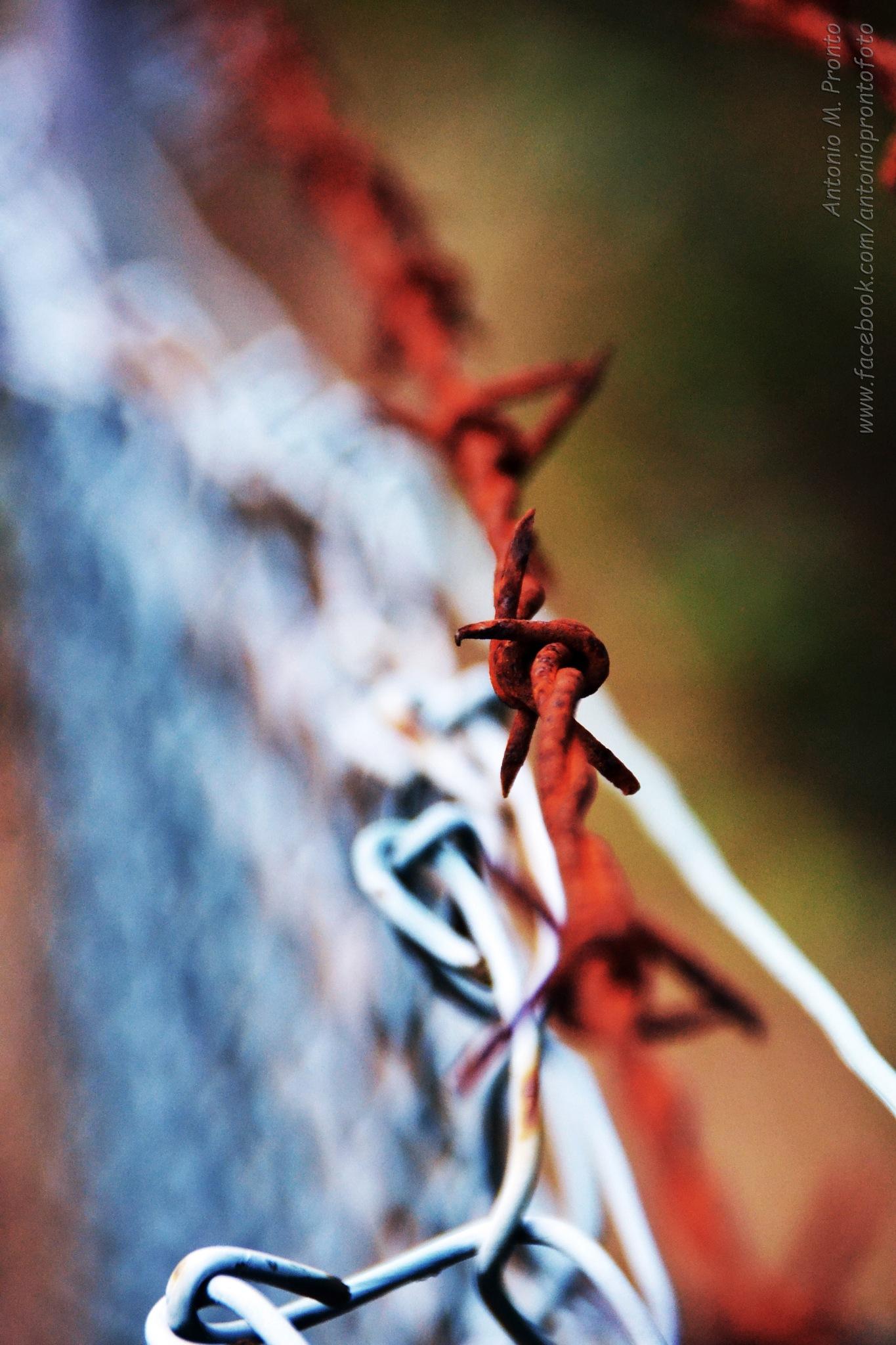 what separates us by Antonio Pronto