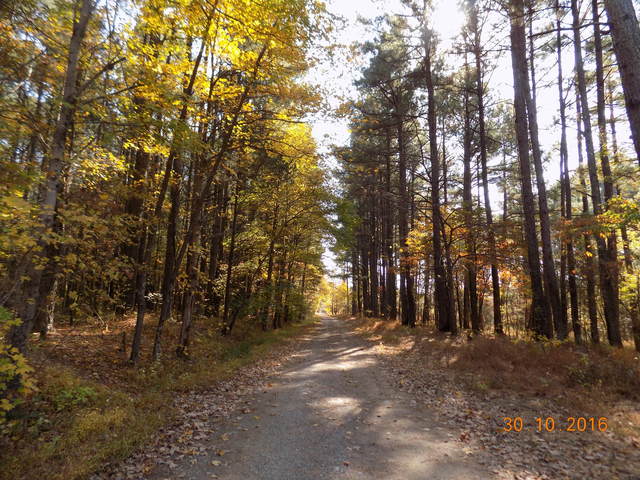 down a dirt road by galepiper