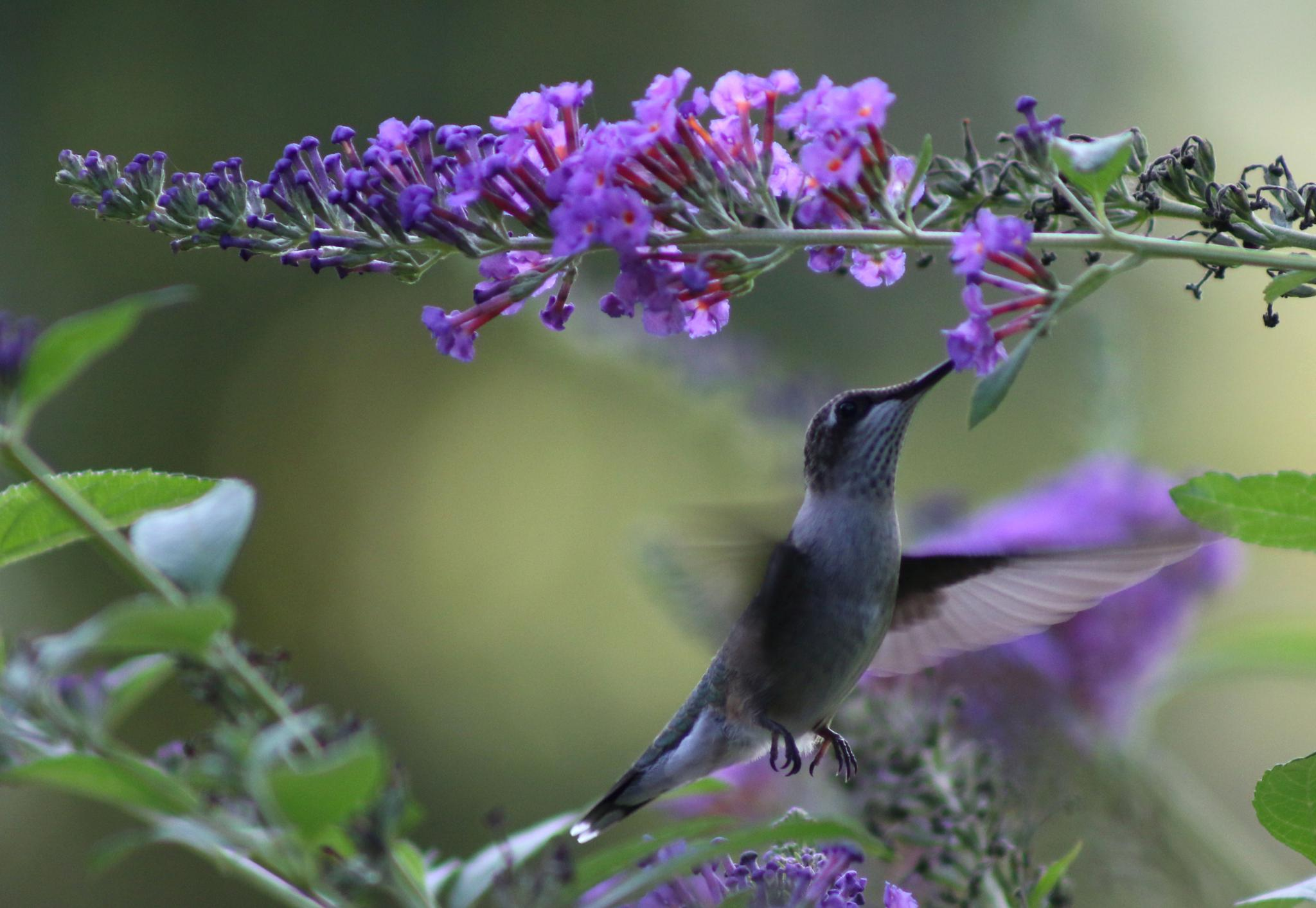 Sipping nectar by Cindy Stewart