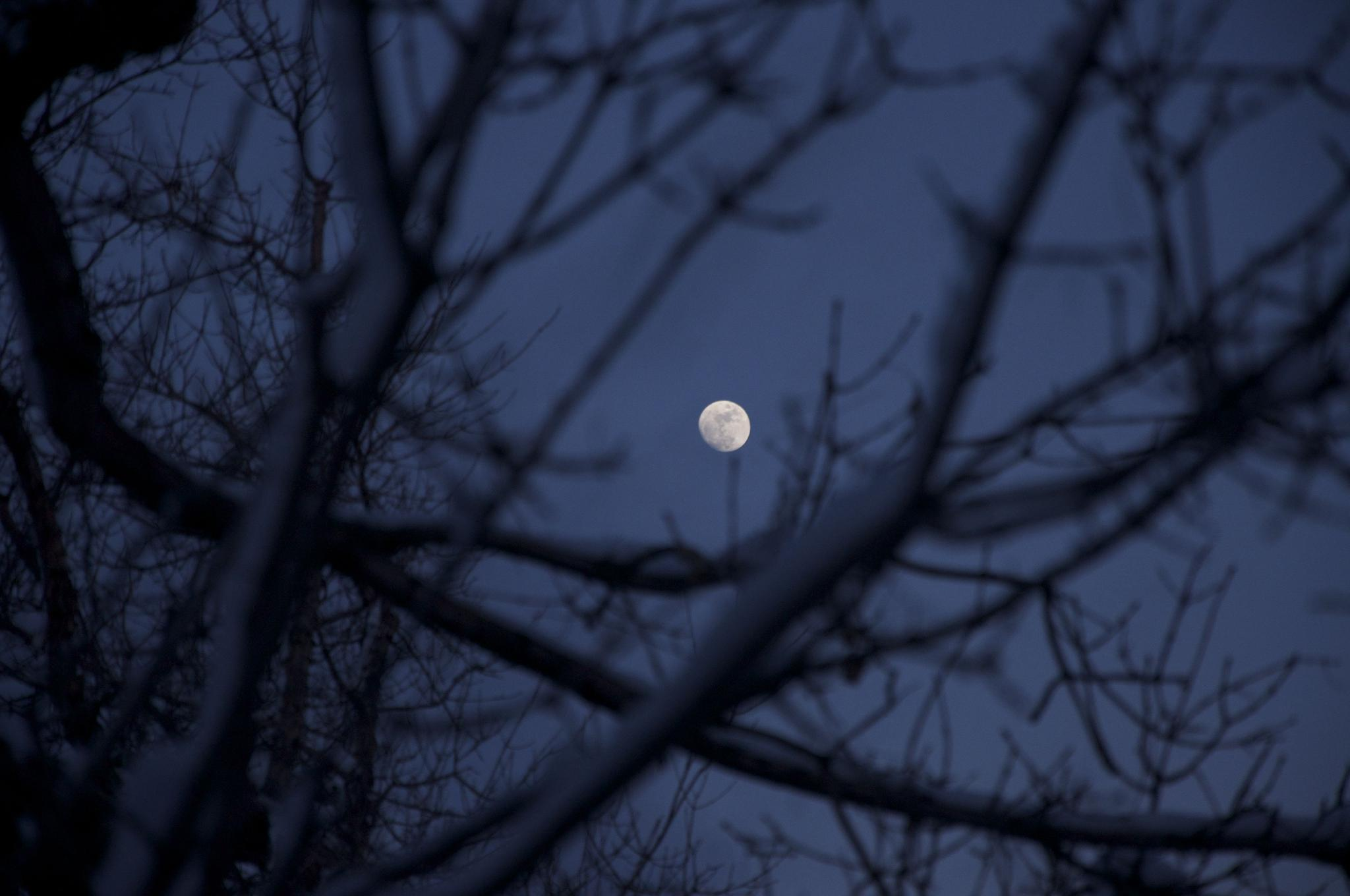 Photo in Random #moon #evening #trees