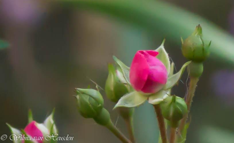 still in bloom by wilma van heusden