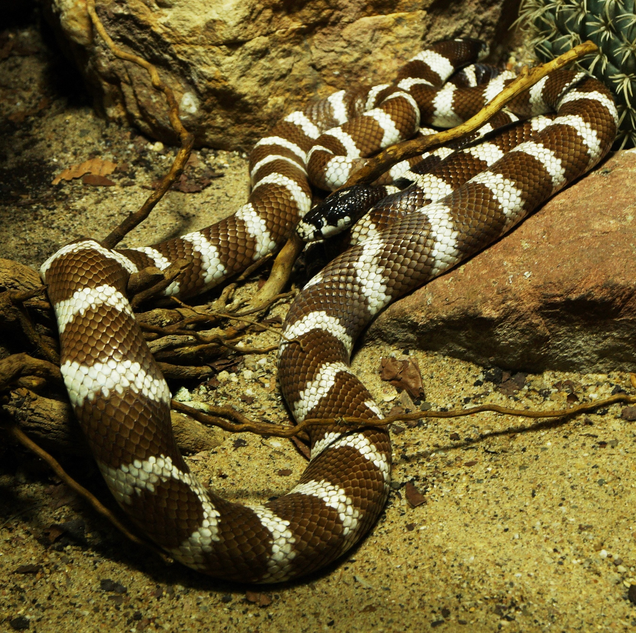 python by wilma van heusden