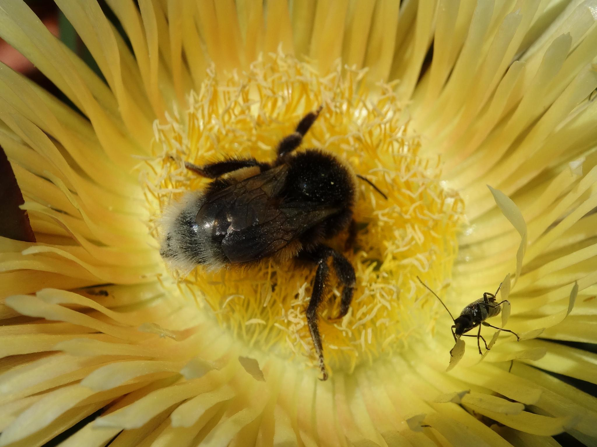 Bee and pal on a feed by wilma van heusden