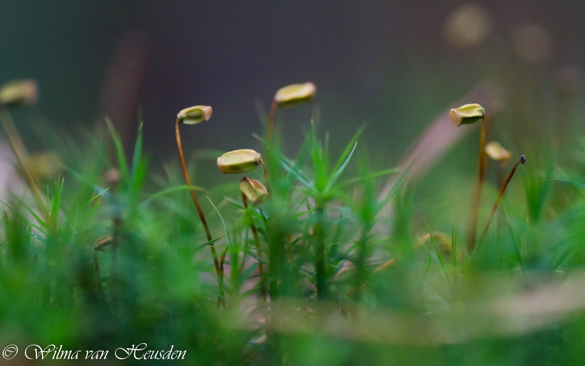 moss in bloom by wilma van heusden