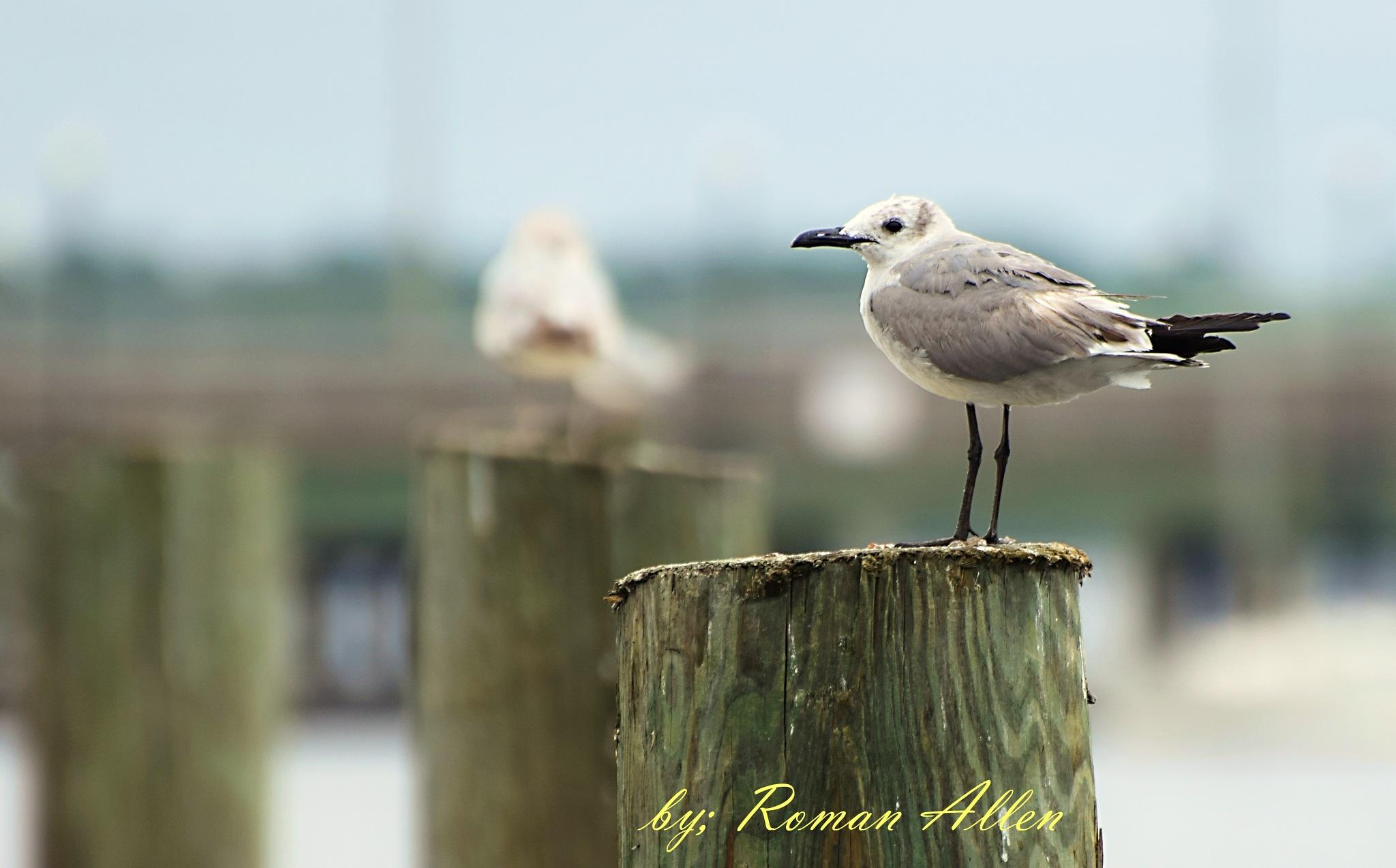 Birdie by roman.aridrums