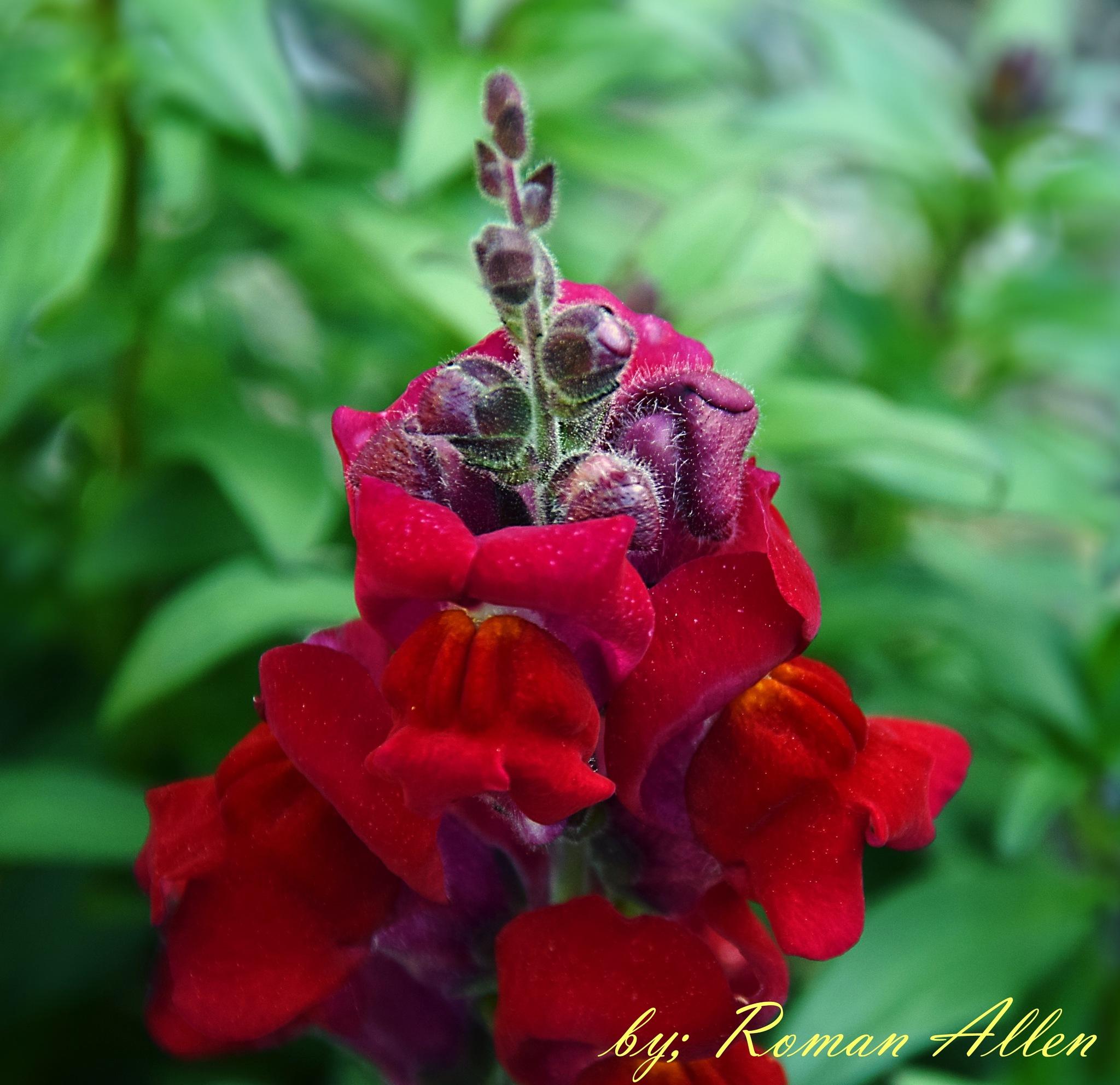 Sweet Flower by roman.aridrums